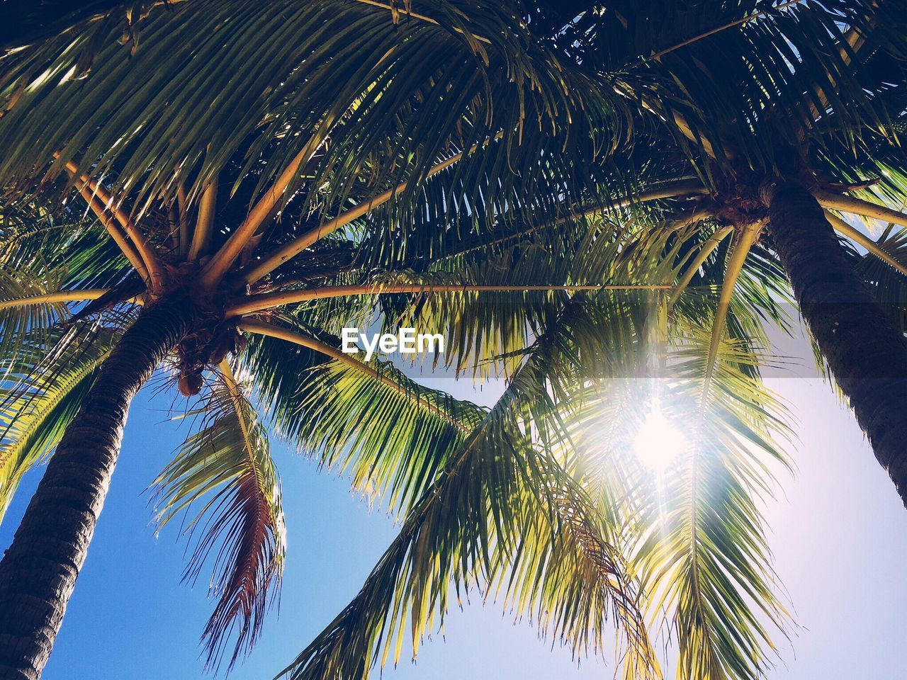 High section of palm trees against clear sky
