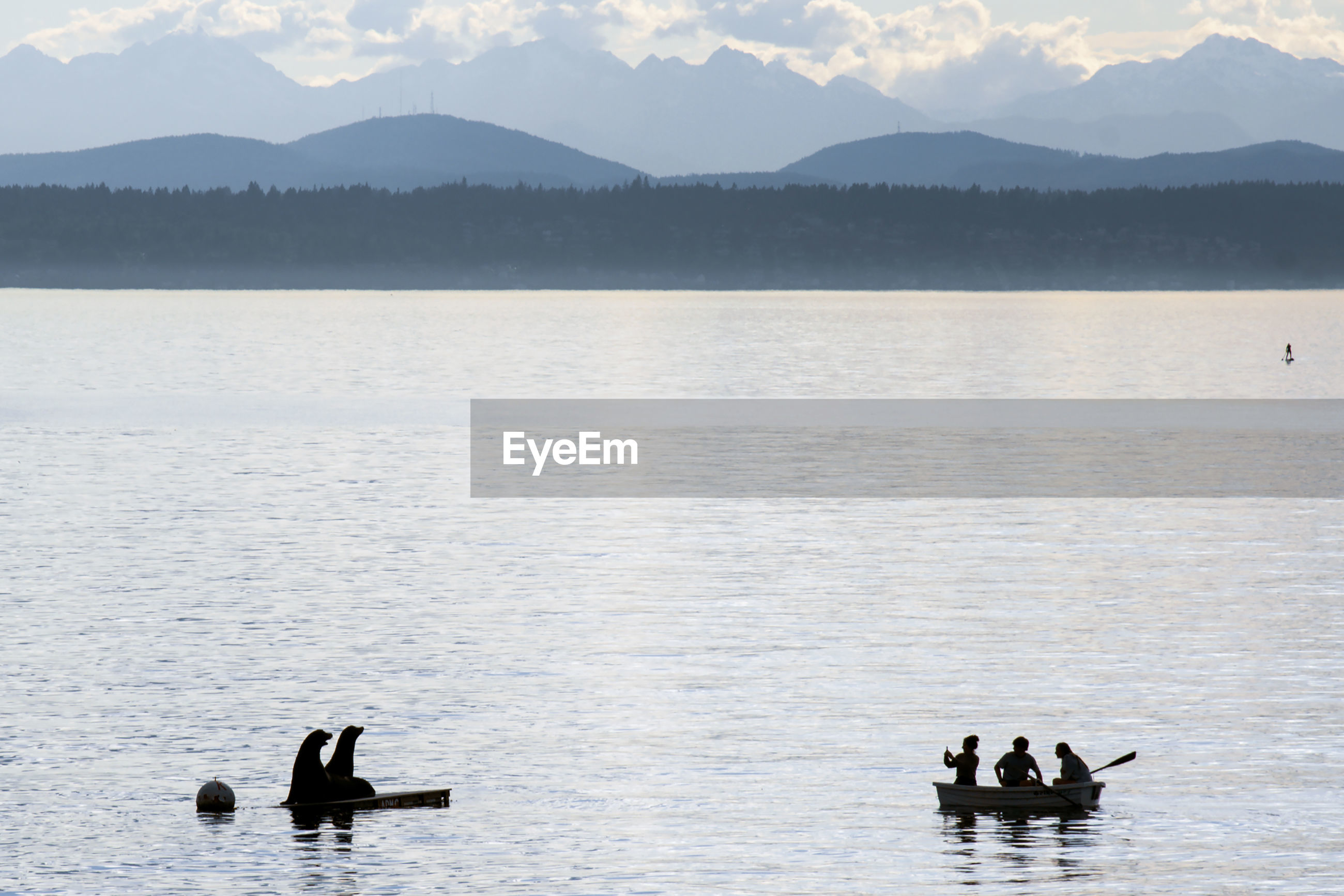 Silhouetted sea lions and young people in a row boat out on puget sound near seattle, posing