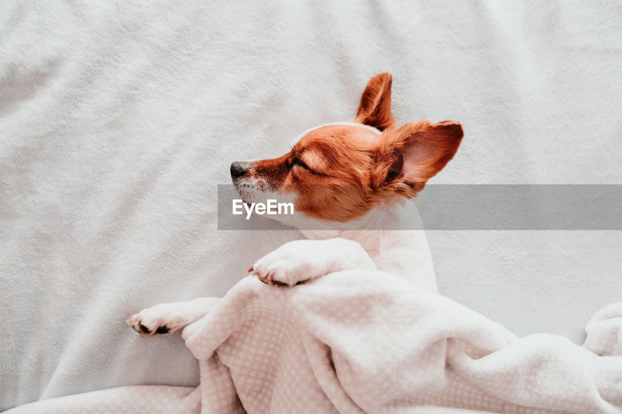 Close-up of dog sleeping on bed at home