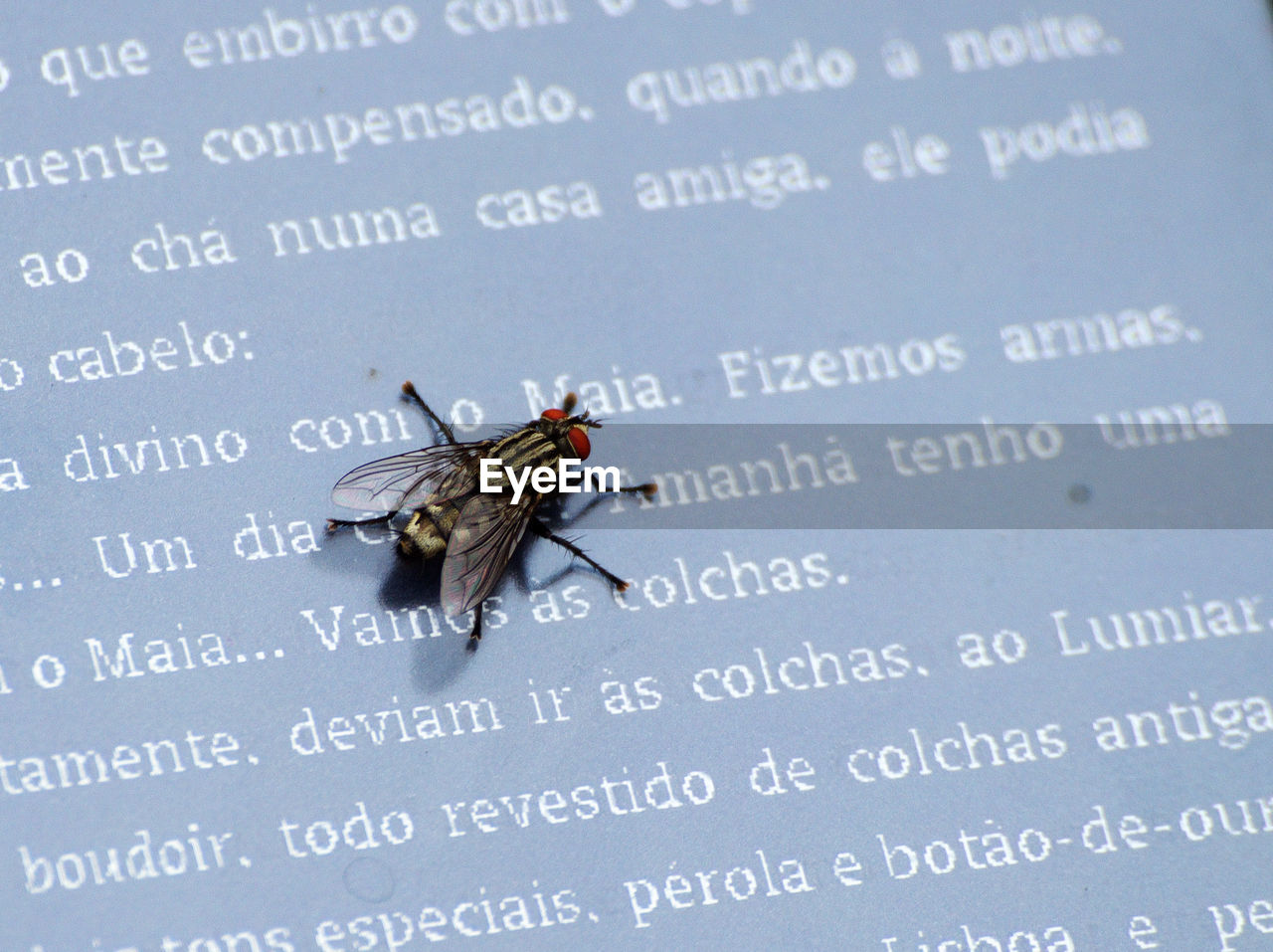 CLOSE-UP OF HOUSEFLY ON A TEXT