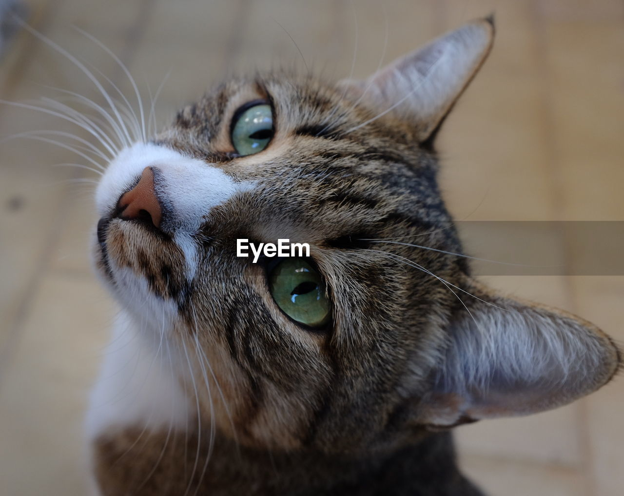 cat, feline, one animal, domestic cat, domestic animals, animal, animal themes, mammal, domestic, pets, close-up, vertebrate, whisker, no people, animal body part, focus on foreground, indoors, looking, looking away, animal head, animal eye, yellow eyes, tabby, animal mouth