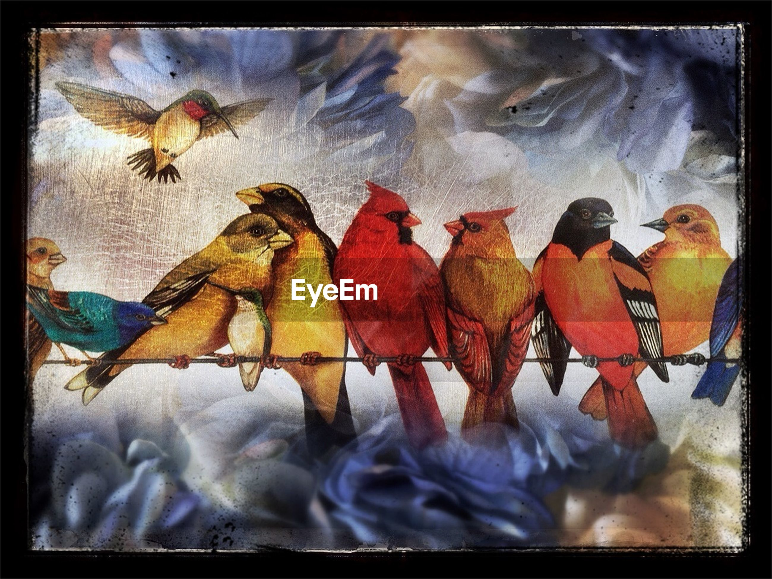 transfer print, auto post production filter, animal themes, wildlife, animals in the wild, indoors, fish, medium group of animals, bird, animal representation, no people, nature, full length, day, sea life, art and craft, high angle view, two animals