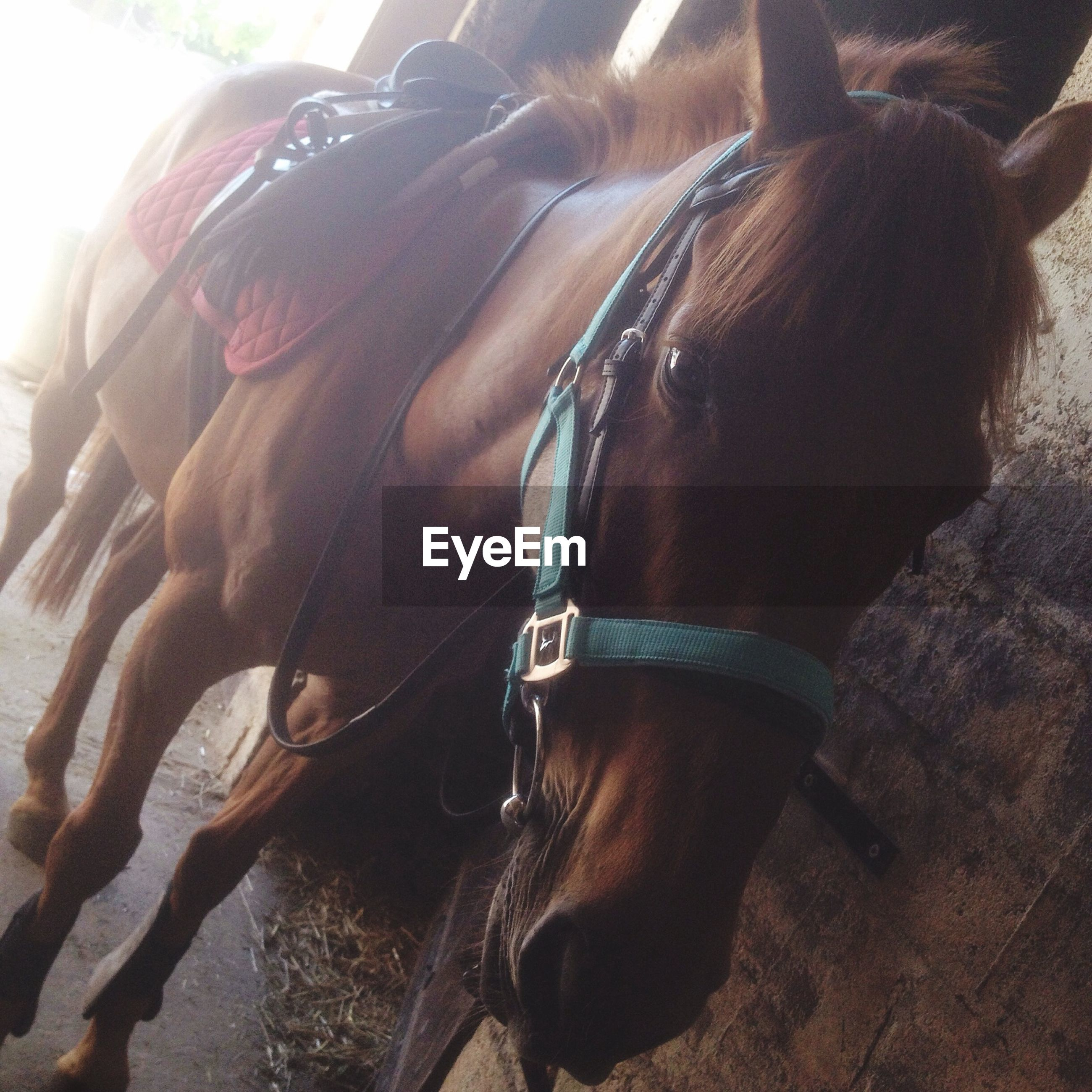 horse, animal themes, close-up, working animal, livestock, sunlight, outdoors, day, domestic animals, bridle, one animal, standing, side view, focus on foreground, part of, arts culture and entertainment, low angle view, brown