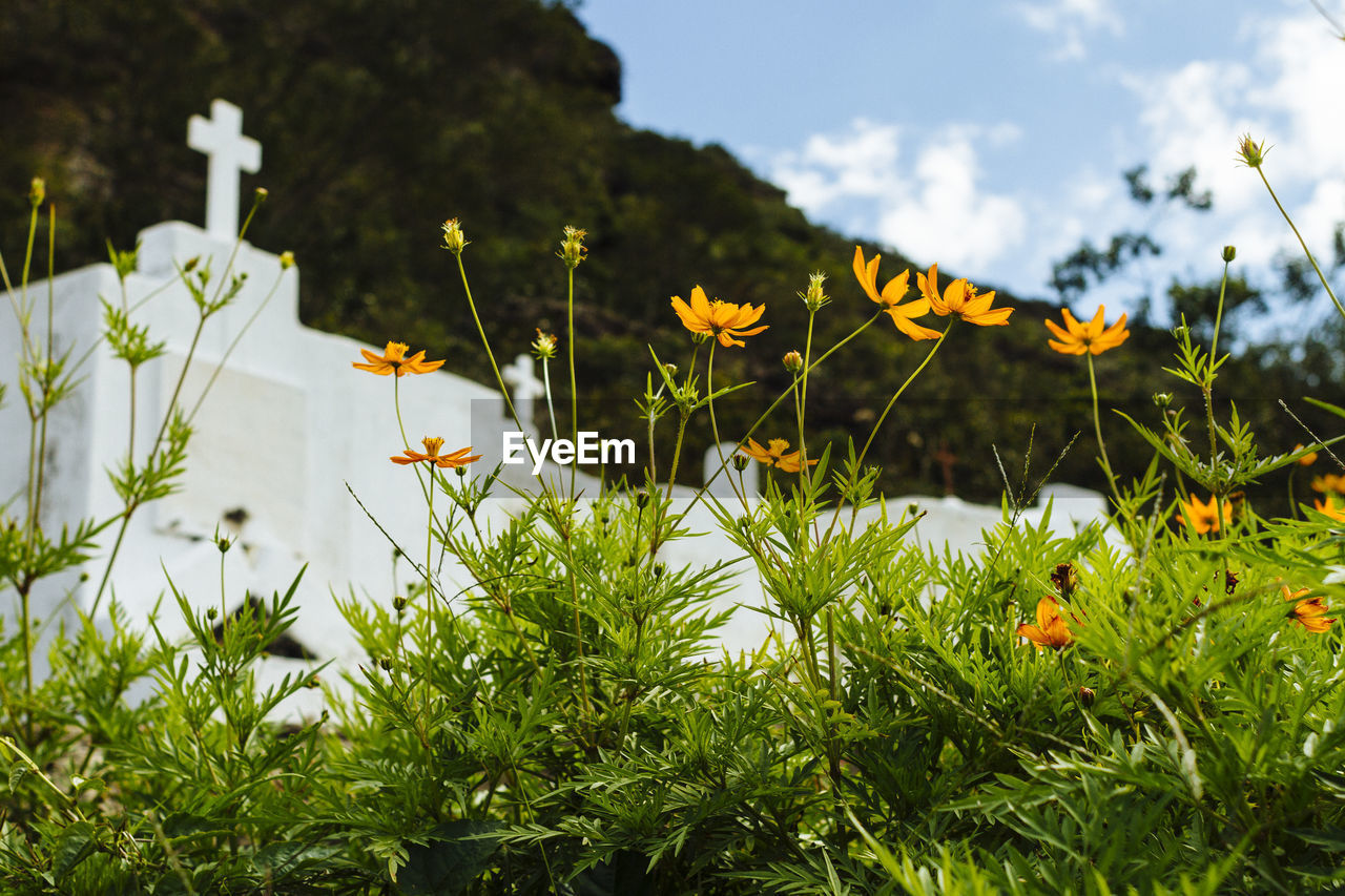plant, growth, flower, beauty in nature, flowering plant, freshness, nature, vulnerability, green color, fragility, no people, yellow, close-up, day, leaf, focus on foreground, plant part, field, land, petal, outdoors, flower head