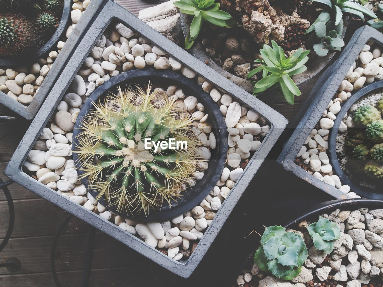 High Angle View Of Potted Cacti