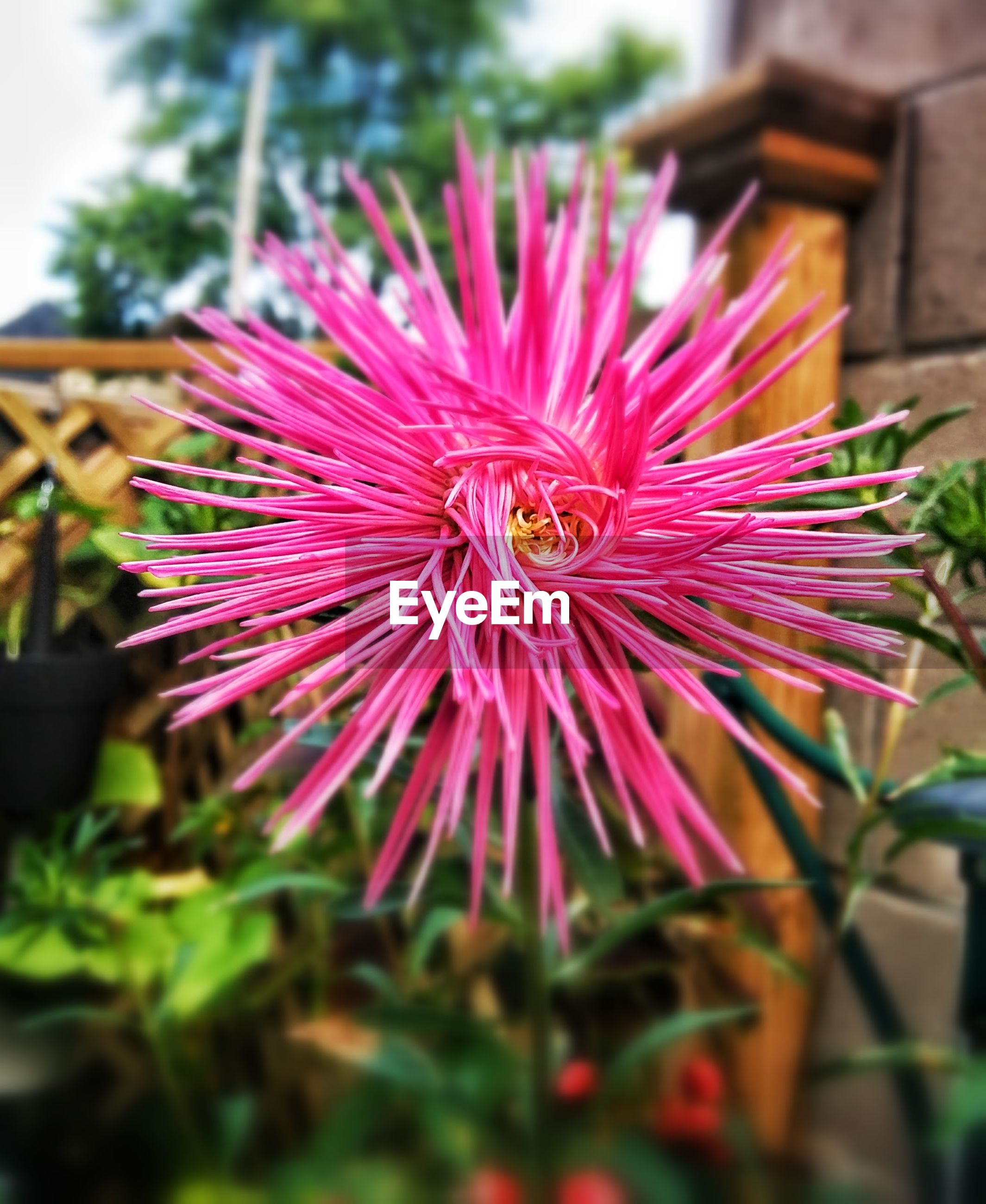 Close-up of pink flower blooming in park