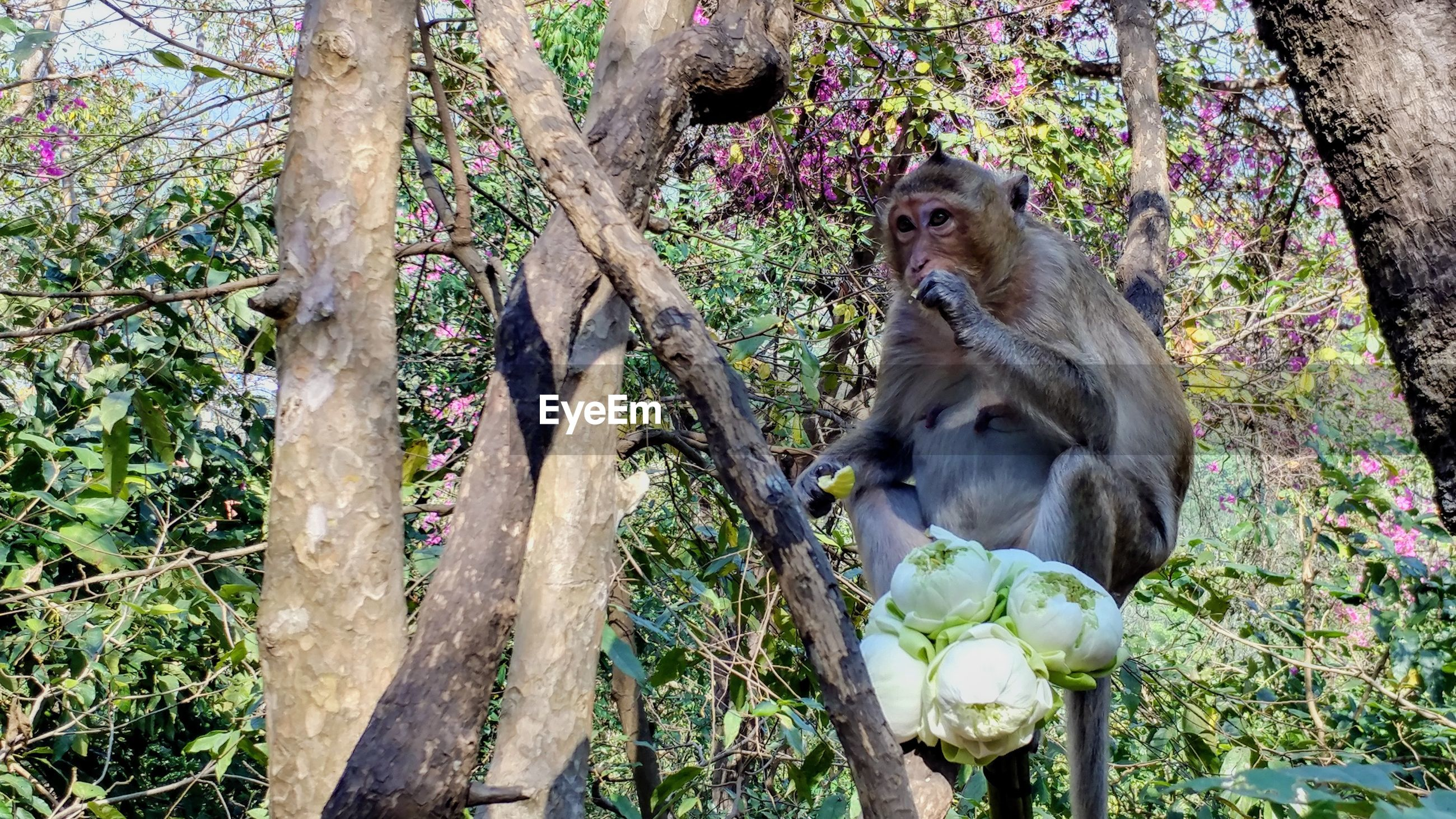 tree, animals in the wild, animal wildlife, animal themes, no people, day, mammal, tree trunk, branch, outdoors, monkey, nature, one animal, growth, sitting, beauty in nature, baboon