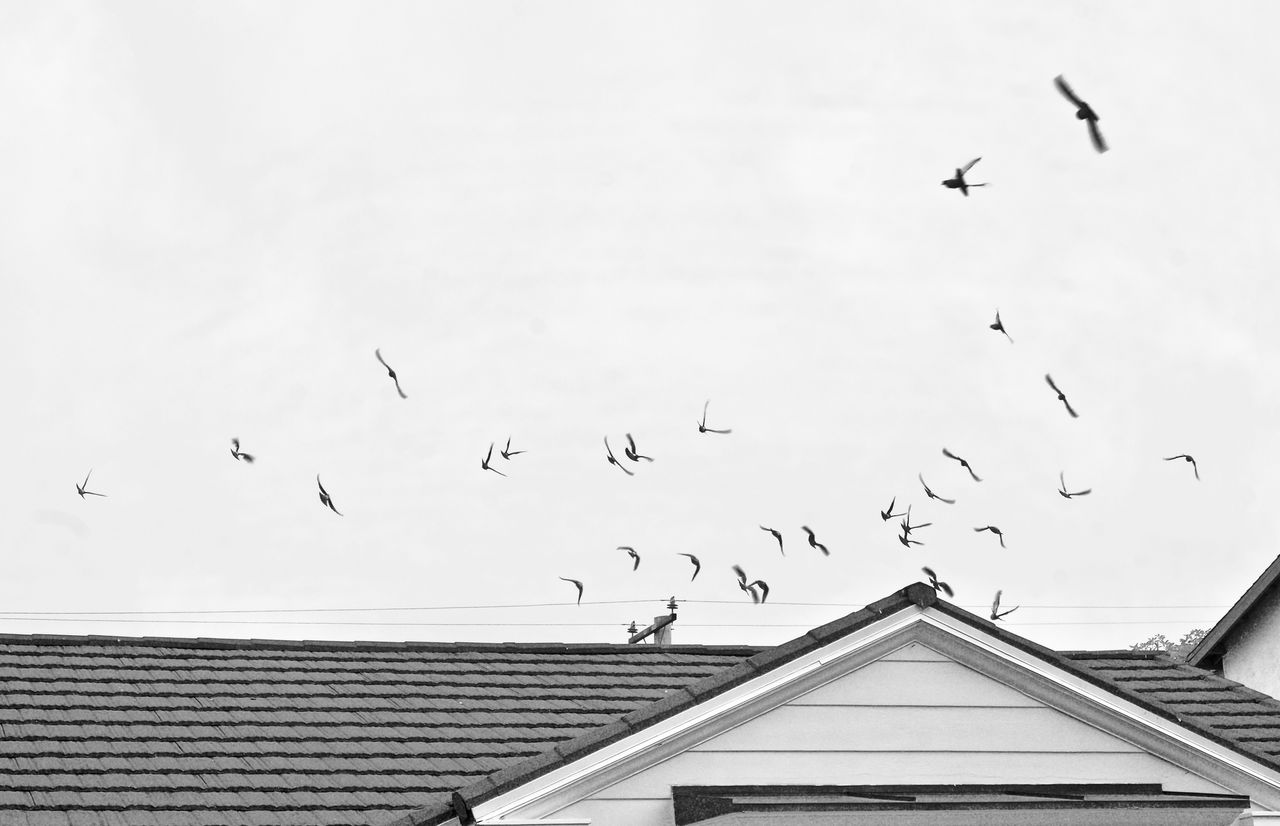 bird, flying, vertebrate, animal wildlife, animal, group of animals, animal themes, animals in the wild, sky, large group of animals, architecture, built structure, building exterior, flock of birds, mid-air, roof, no people, nature, low angle view, day