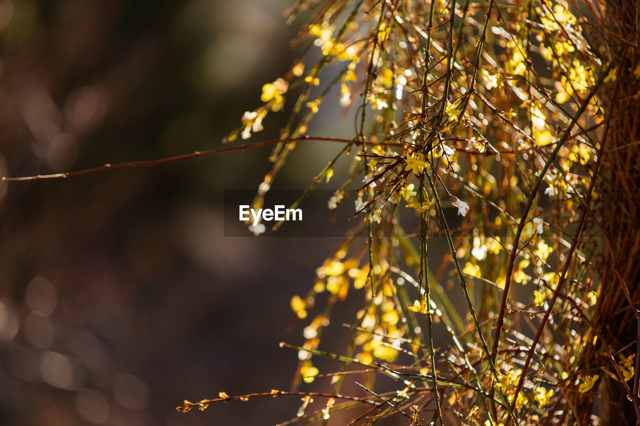 plant, growth, beauty in nature, tree, focus on foreground, nature, close-up, branch, no people, tranquility, outdoors, day, selective focus, fragility, vulnerability, sunlight, freshness, low angle view, flower, flowering plant