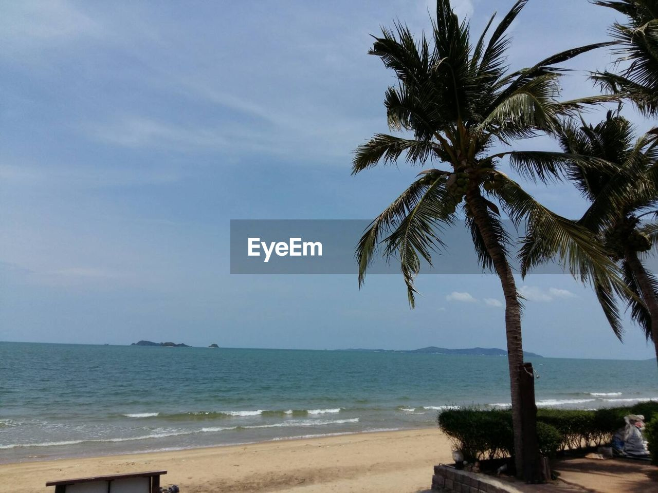 sea, beach, palm tree, horizon over water, water, scenics, beauty in nature, shore, nature, tranquility, tree, tranquil scene, sky, day, sand, no people, outdoors, vacations, wave