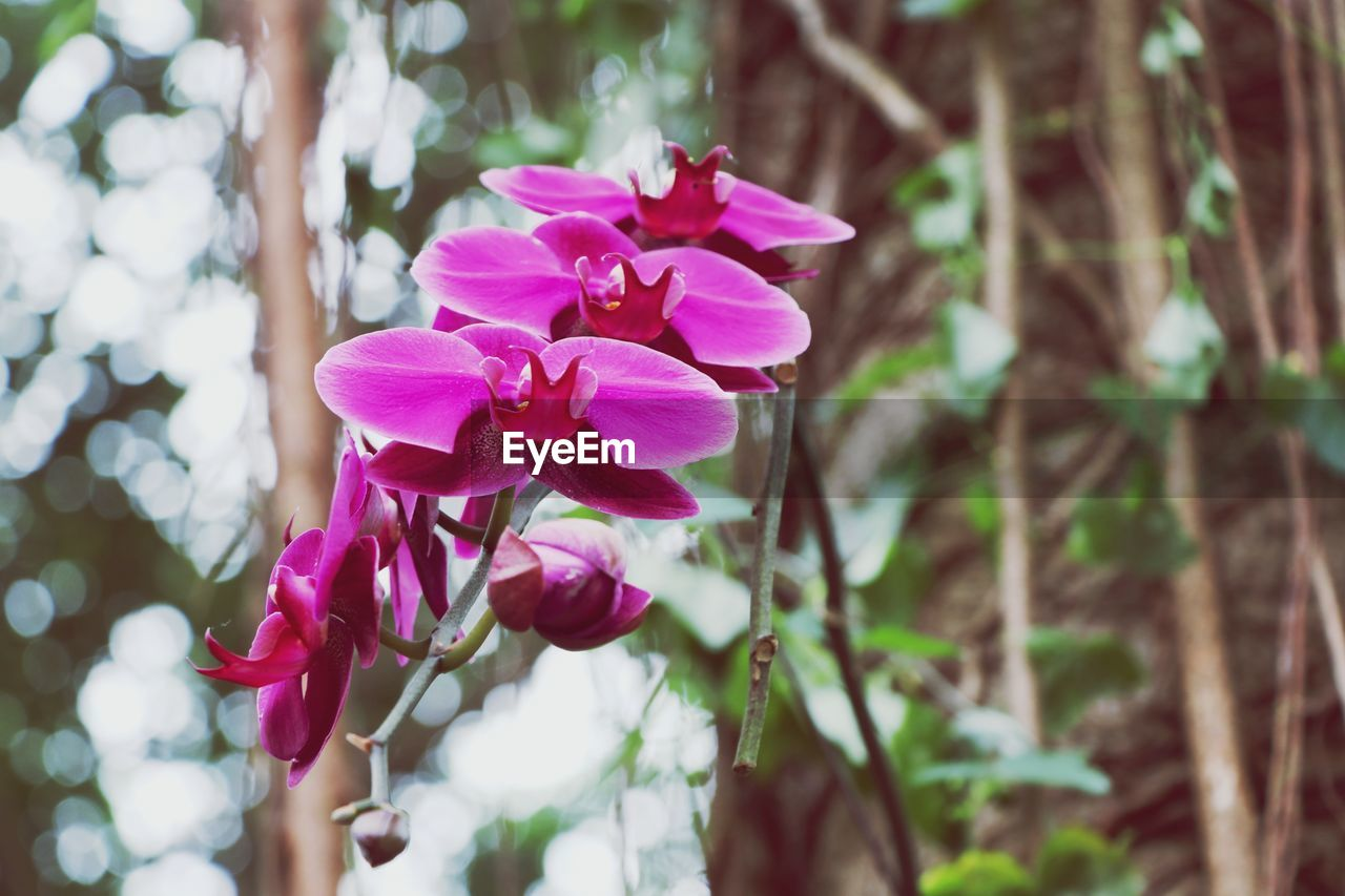 flowering plant, flower, plant, vulnerability, freshness, beauty in nature, fragility, petal, close-up, pink color, flower head, growth, inflorescence, nature, focus on foreground, no people, day, outdoors, botany, land