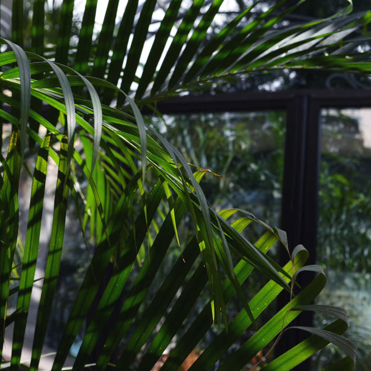 growth, green color, plant, leaf, nature, beauty in nature, close-up, no people, day, outdoors, grass, tree, frond, greenhouse, fragility, freshness
