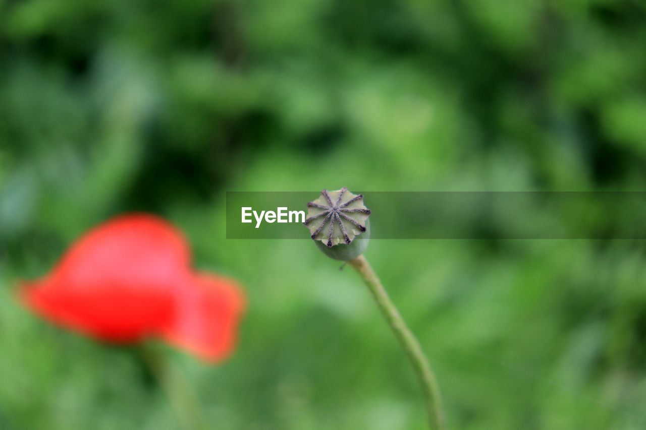 flower, flowering plant, plant, fragility, vulnerability, beauty in nature, freshness, growth, close-up, inflorescence, petal, flower head, focus on foreground, day, nature, selective focus, no people, plant stem, botany, outdoors