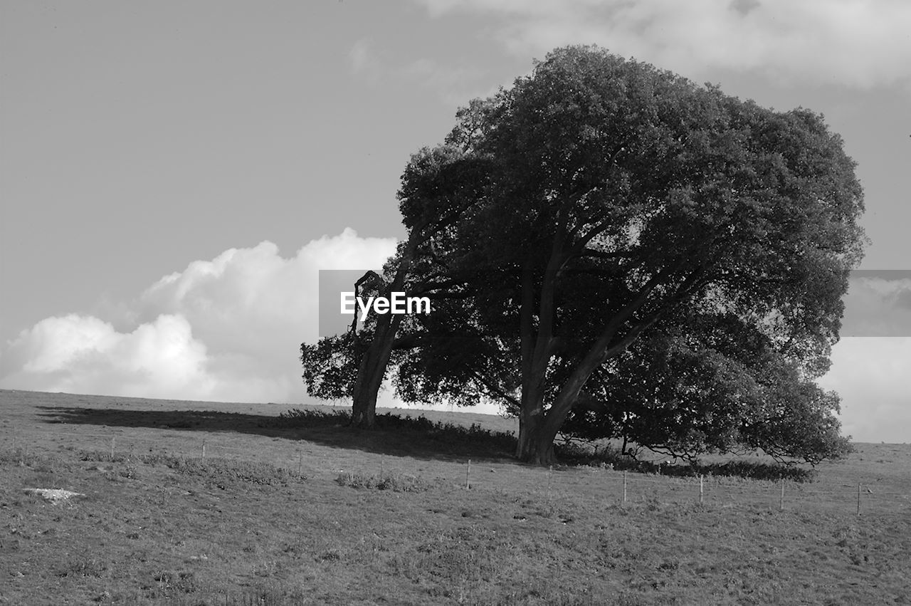 sky, tree, landscape, nature, field, cloud - sky, tranquility, beauty in nature, outdoors, scenics, day, grass, growth, no people, lone