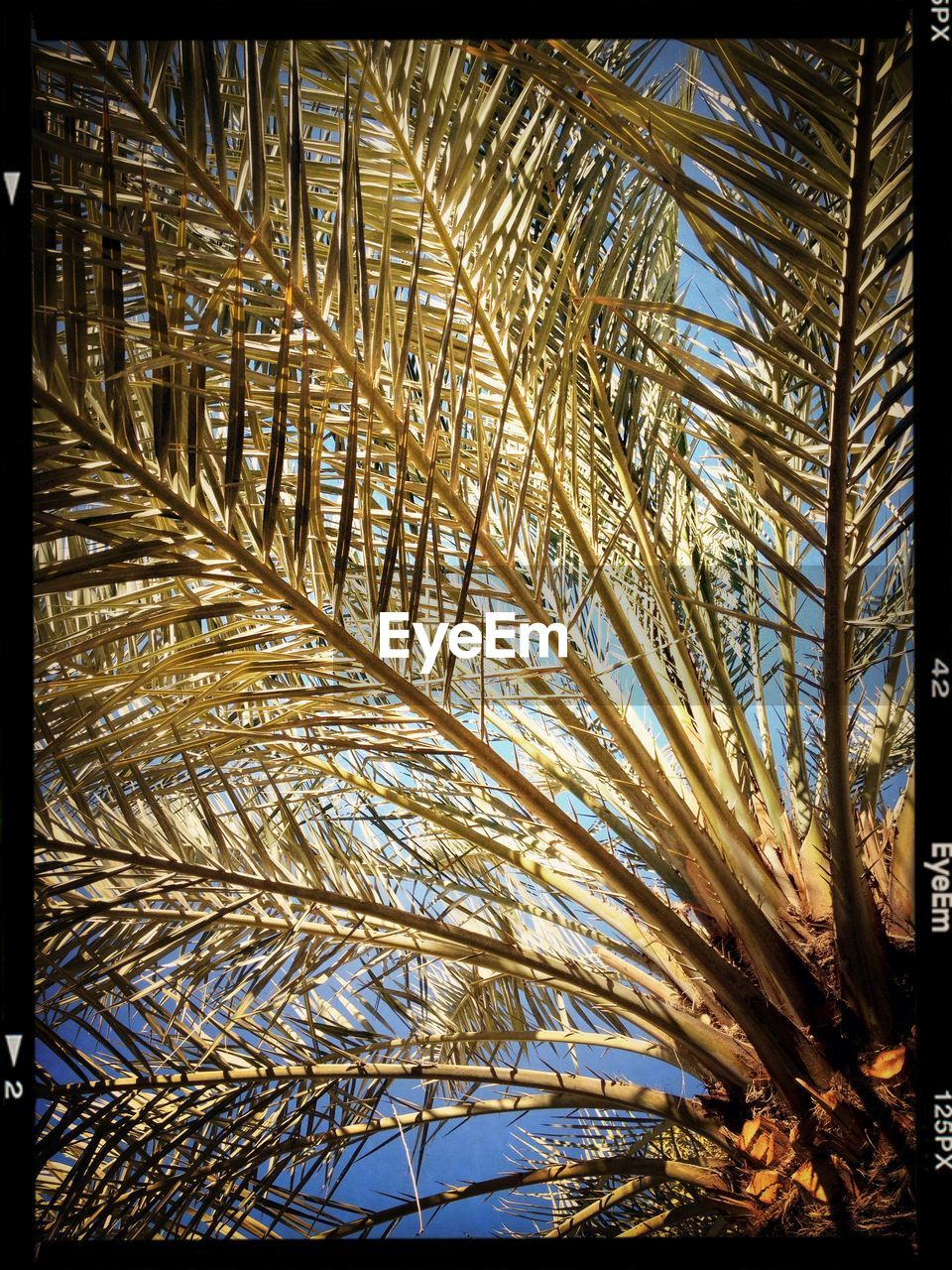 palm tree, growth, nature, tree, low angle view, day, outdoors, no people, beauty in nature, clear sky, sky