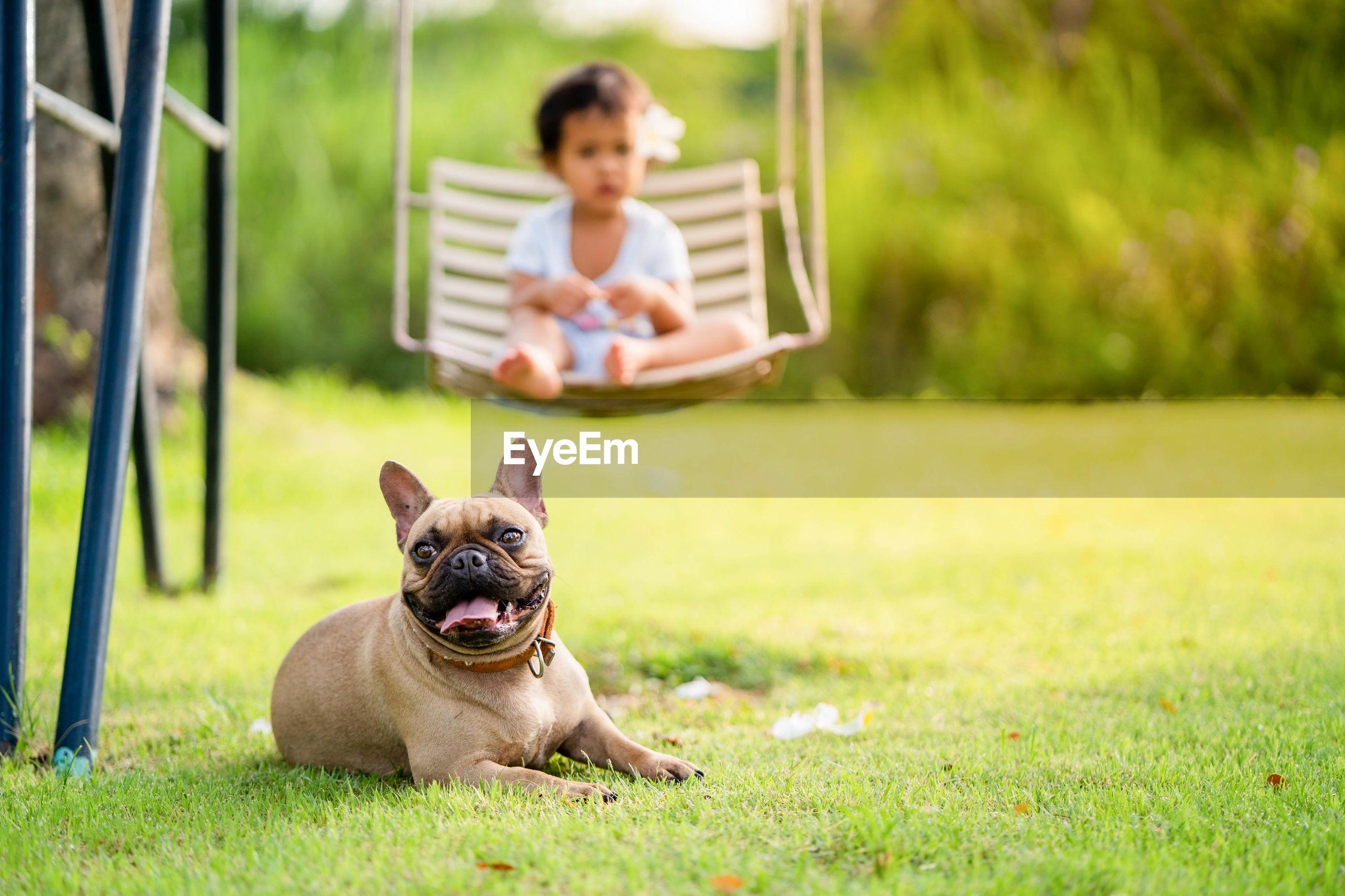 Girl swinging while dog sitting on grassy land
