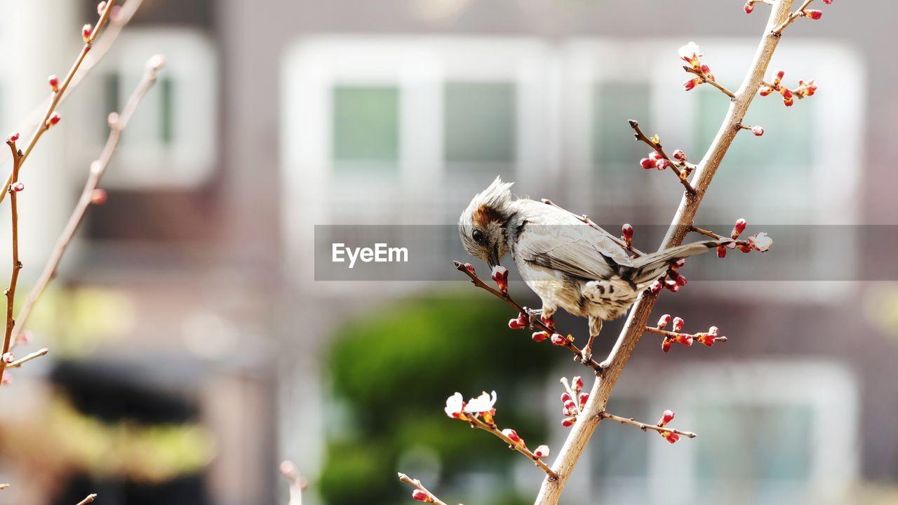 CLOSE-UP OF BIRD ON FLOWER