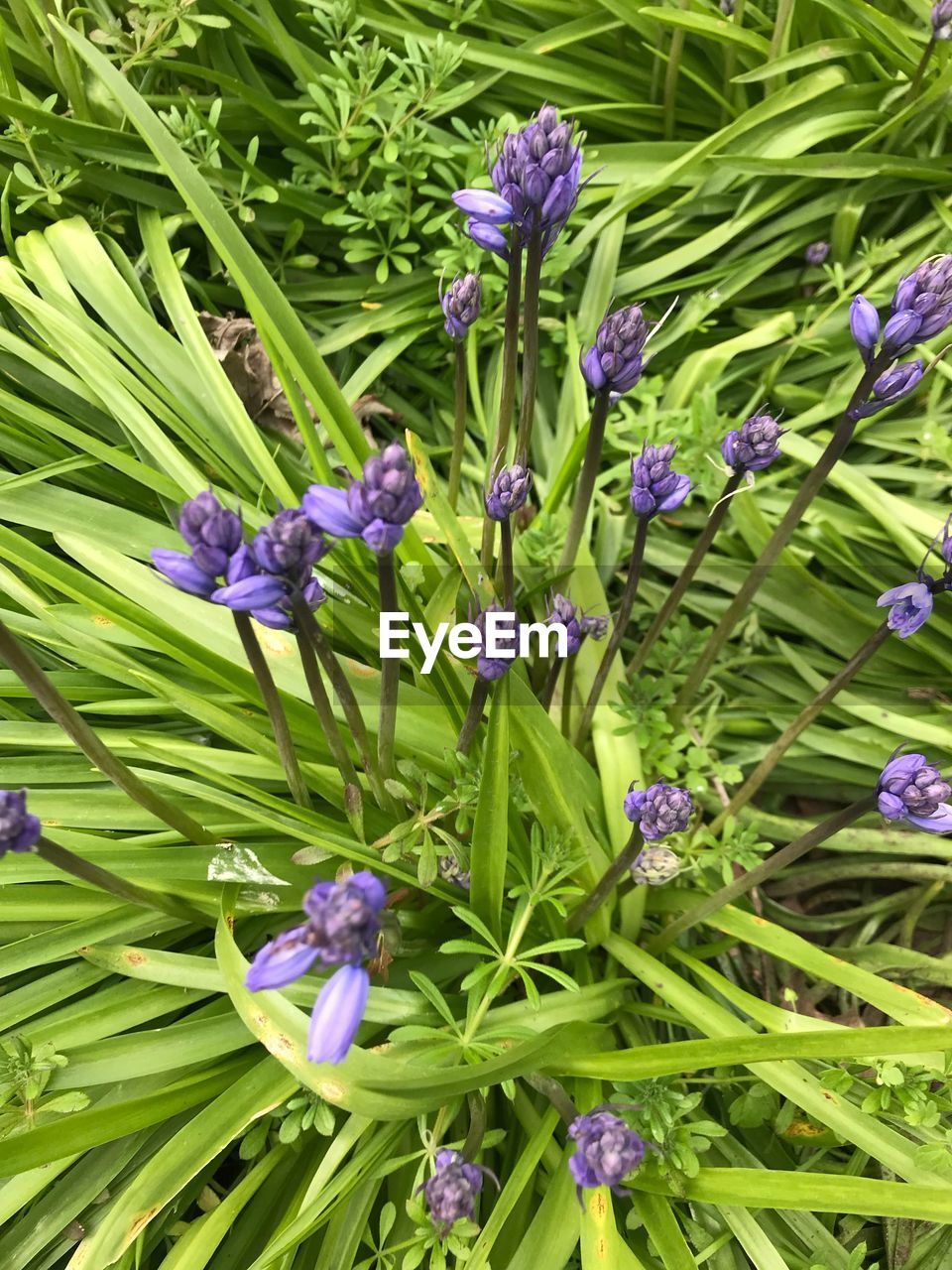 flower, flowering plant, plant, purple, beauty in nature, growth, freshness, vulnerability, fragility, green color, close-up, nature, no people, day, leaf, plant part, petal, full frame, high angle view, botany, outdoors, flower head, flowerbed