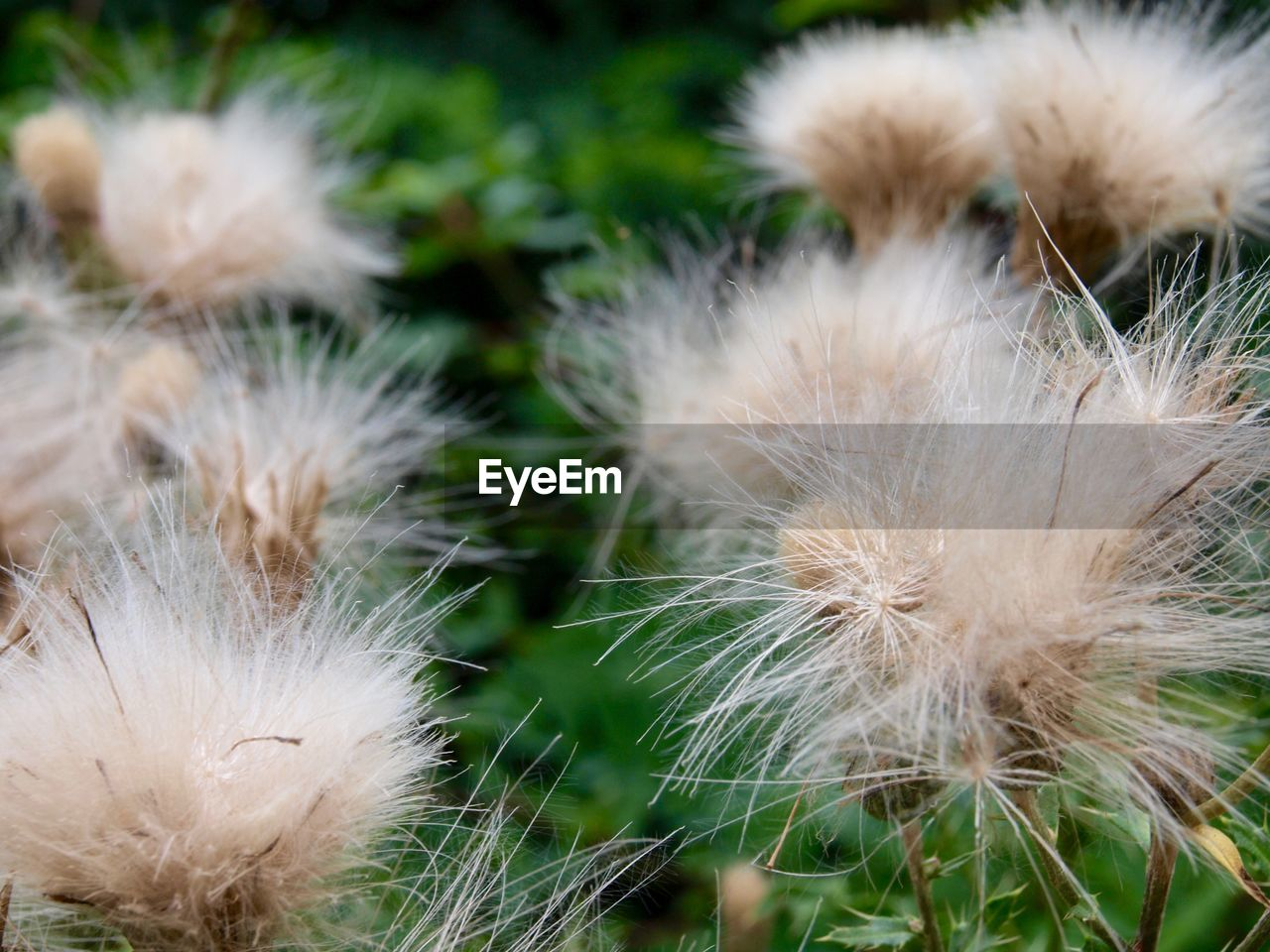 nature, close-up, no people, plant, white color, growth, fragility, outdoors, day, flower, beauty in nature, grass, domestic animals, freshness, flower head, mammal