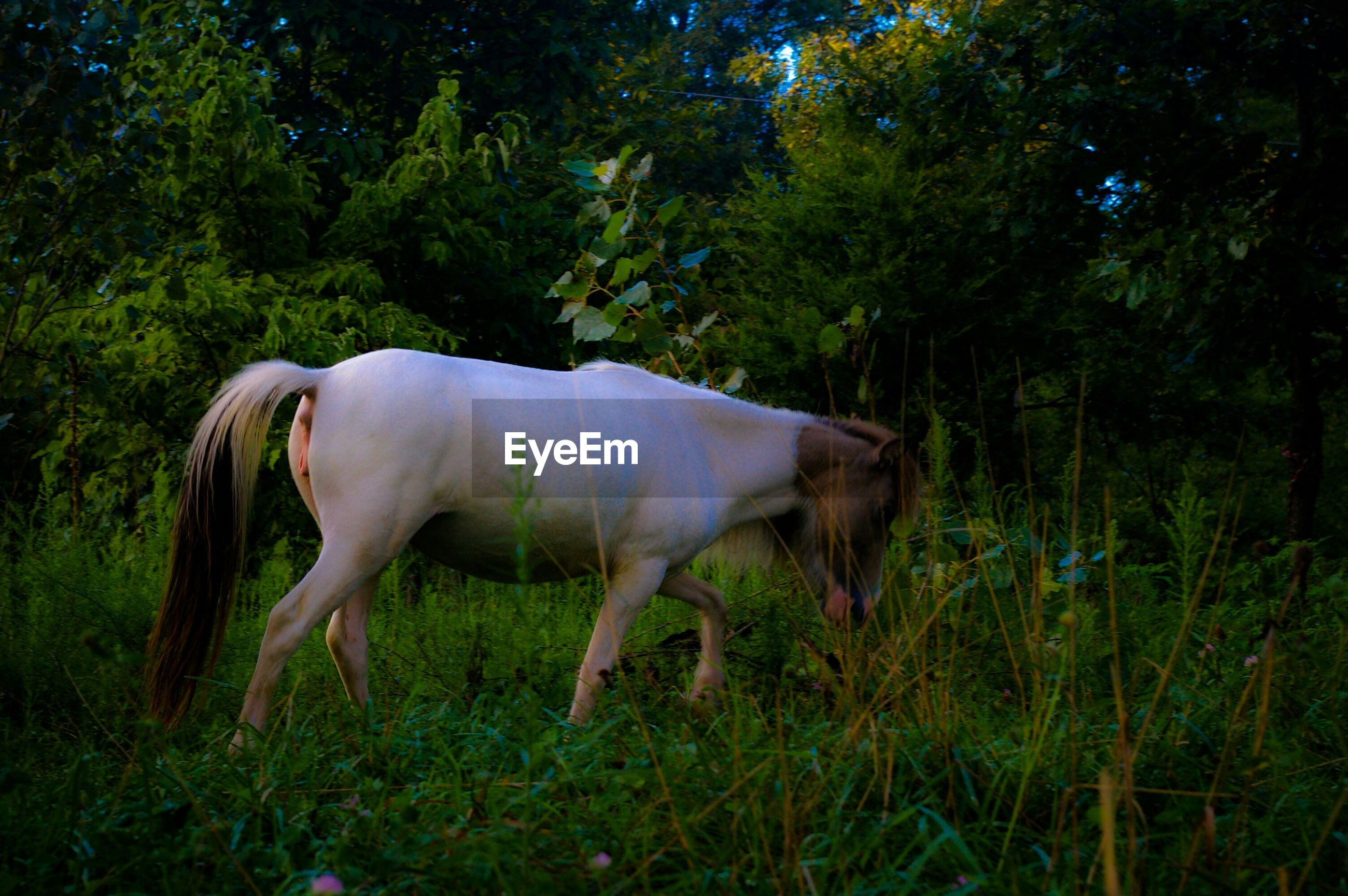 Horse walking on grassy field against trees