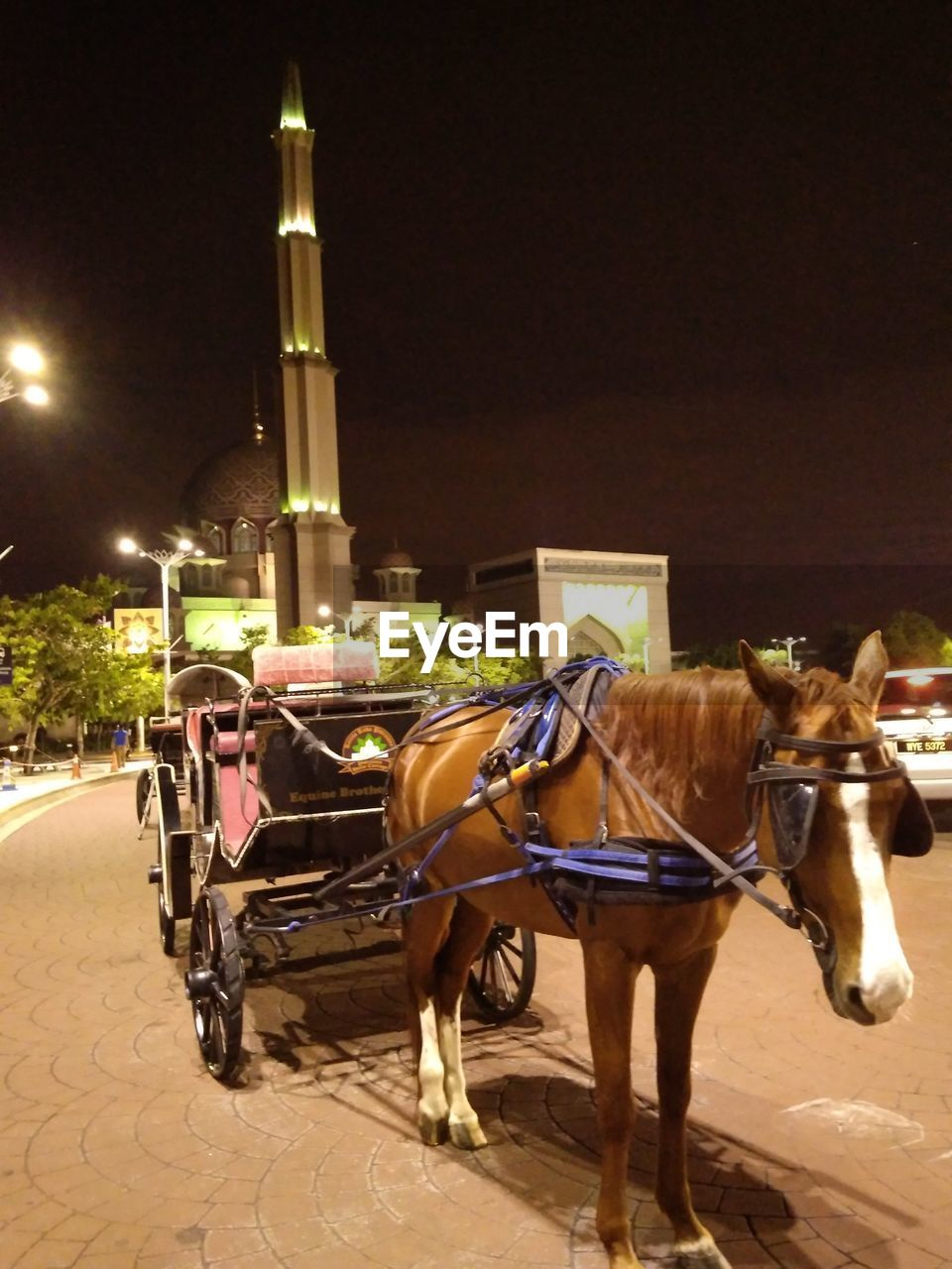 domestic animals, horse, working animal, animal themes, mammal, night, horse cart, illuminated, two animals, horsedrawn, built structure, mode of transport, transportation, building exterior, outdoors, architecture, sky, no people