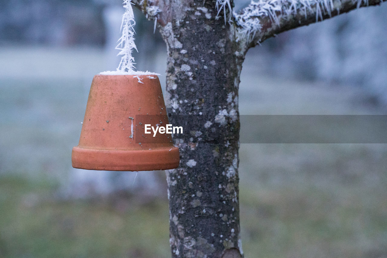 focus on foreground, tree, day, no people, metal, nature, hanging, cold temperature, outdoors, close-up, plant, trunk, tree trunk, winter, snow, frozen, security, safety, ice, snowing