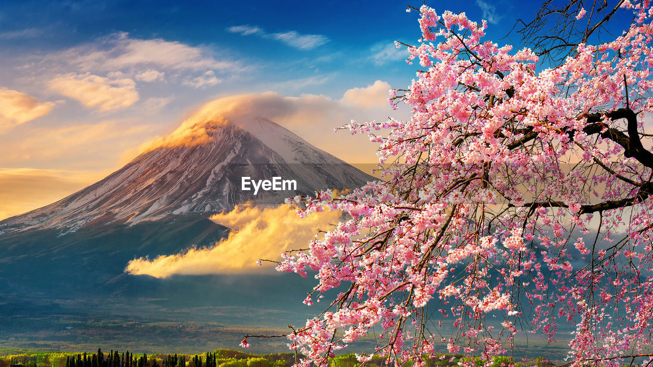 beauty in nature, flower, flowering plant, sky, plant, pink color, scenics - nature, nature, tree, fragility, freshness, springtime, cloud - sky, blossom, mountain, growth, tranquility, branch, tranquil scene, vulnerability, no people, cherry blossom, outdoors, cherry tree