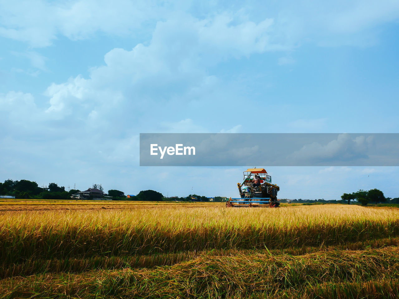 field, land, sky, cloud - sky, plant, agriculture, growth, landscape, environment, scenics - nature, farm, rural scene, nature, beauty in nature, day, agricultural machinery, crop, green color, land vehicle, tranquil scene, outdoors, no people, plantation