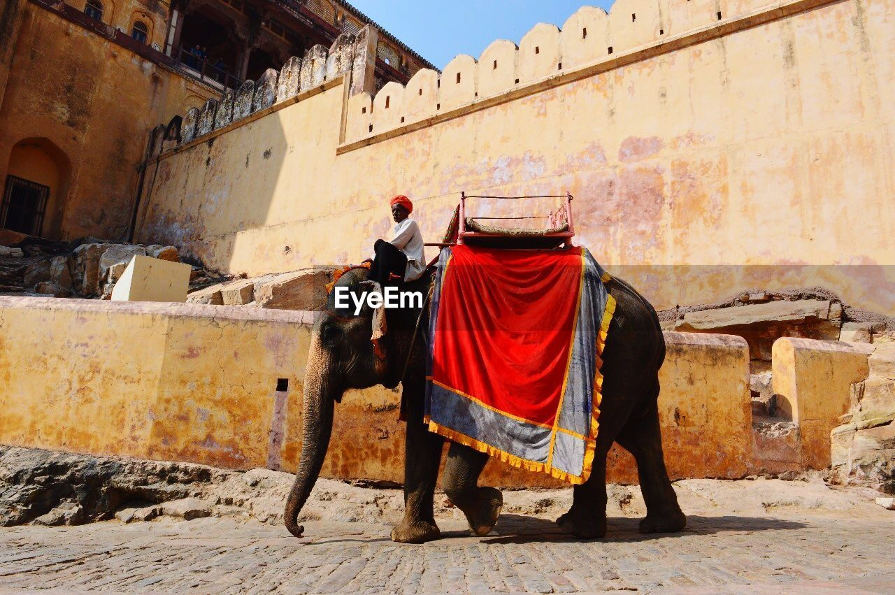building exterior, architecture, built structure, pets, full length, domestic animals, mammal, one animal, domestic, rear view, clothing, day, one person, building, traditional clothing, real people, sunlight, outdoors