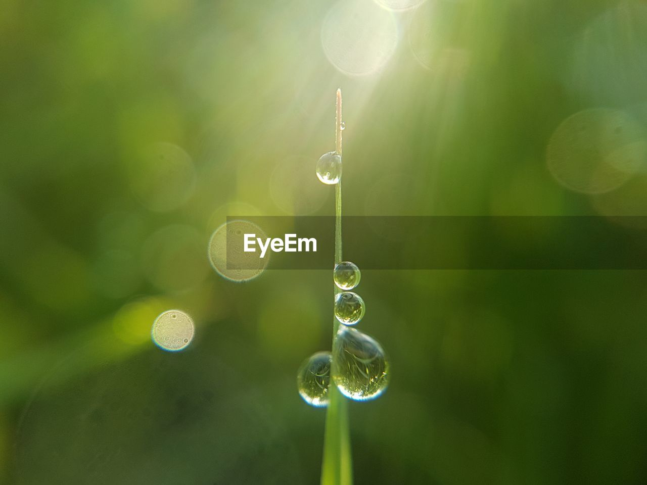nature, close-up, green color, water, drop, no people, focus on foreground, growth, plant, beauty in nature, day, outdoors, selective focus, lens flare, mid-air, fragility, sunlight, freshness, vulnerability, purity, blade of grass