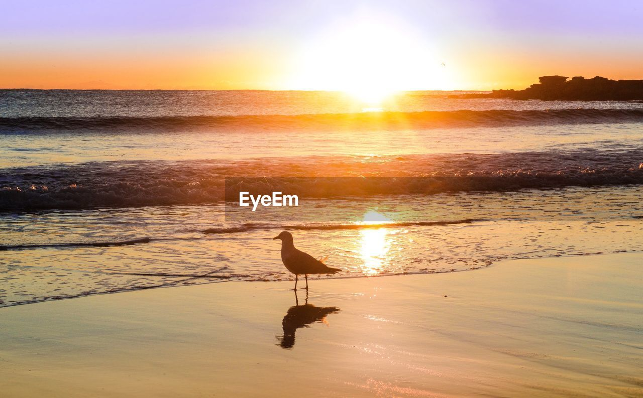 Bird perching on shore at beach against sky during sunset