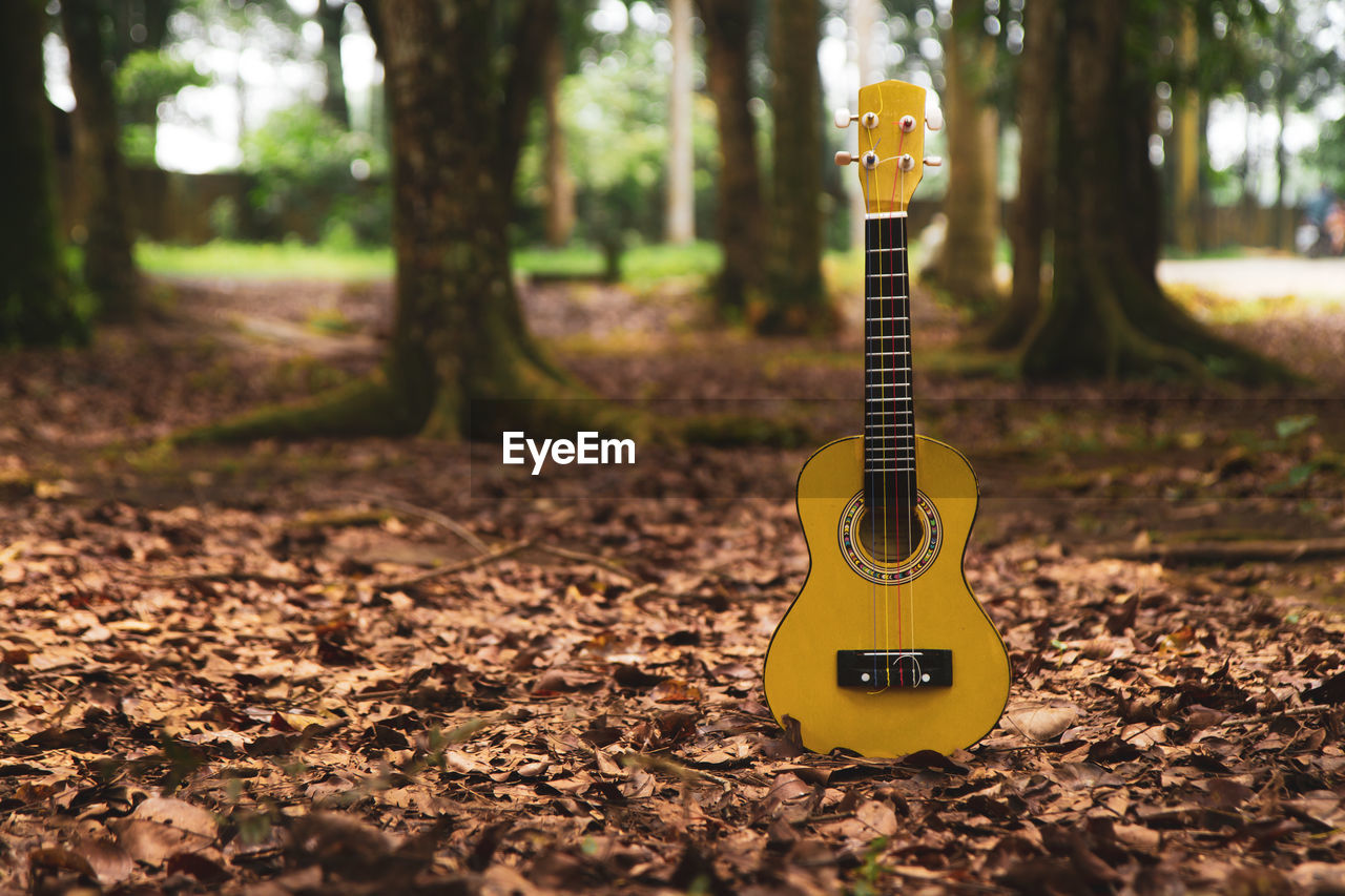Yellow guitar on land in forest