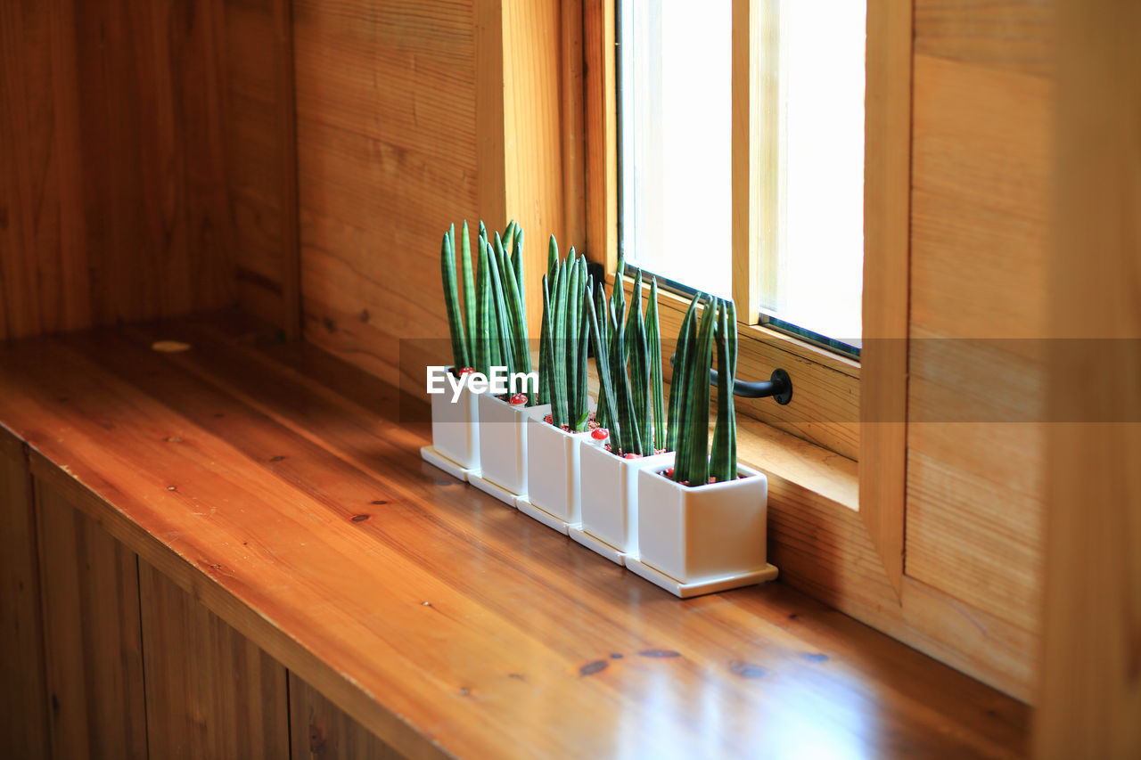 Potted Plants In Row By Window At Home