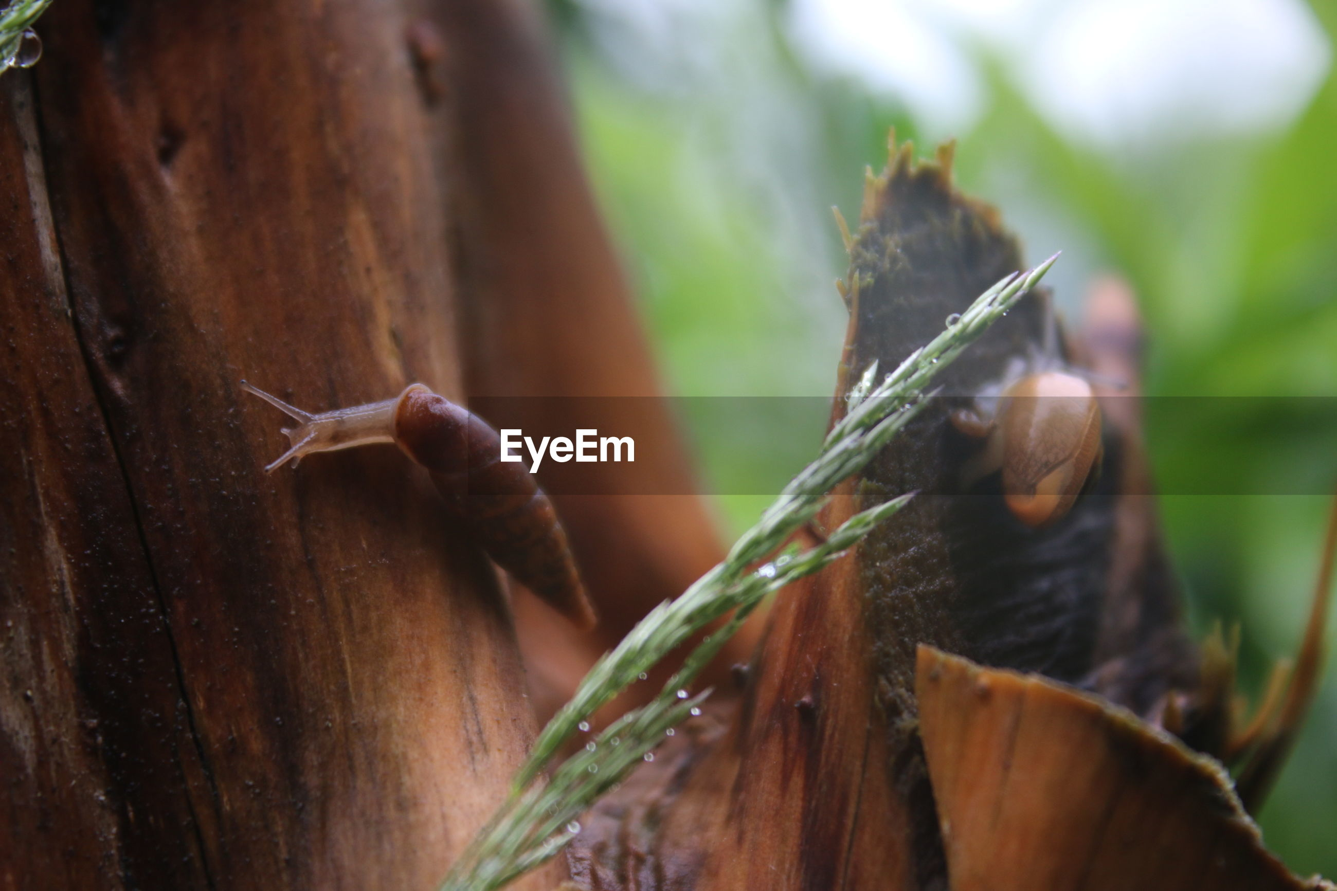 Close-up of snails crawling on bark