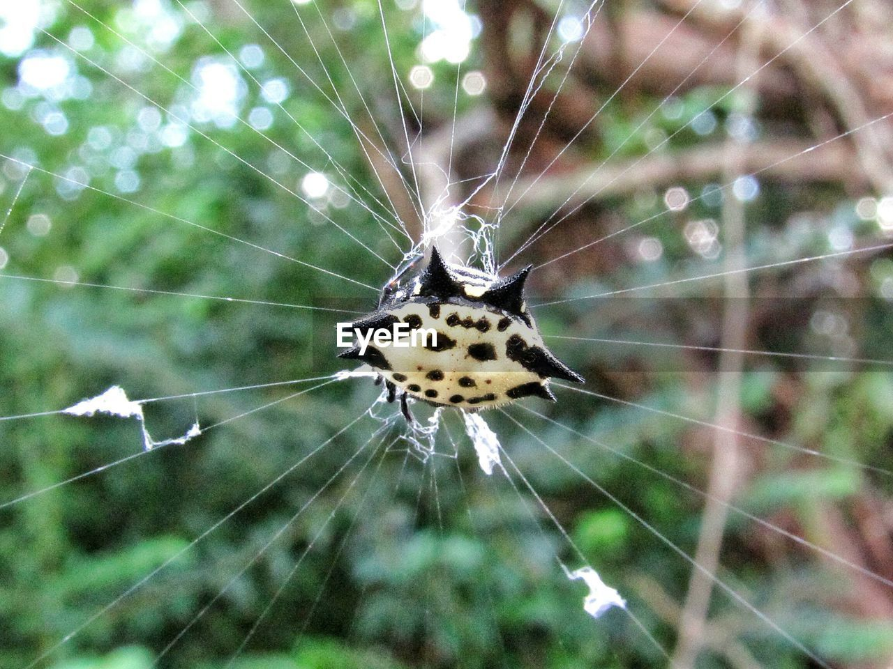 spider web, one animal, fragility, animal themes, animals in the wild, animal wildlife, close-up, animal, focus on foreground, invertebrate, vulnerability, insect, nature, spider, arachnid, day, arthropod, beauty in nature, no people, natural pattern, outdoors, web, complexity