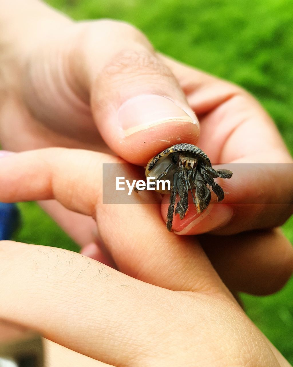 human hand, hand, human body part, one animal, animals in the wild, animal wildlife, holding, body part, finger, real people, one person, human finger, focus on foreground, close-up, unrecognizable person, day, invertebrate, outdoors, amphibian, small, human limb, care