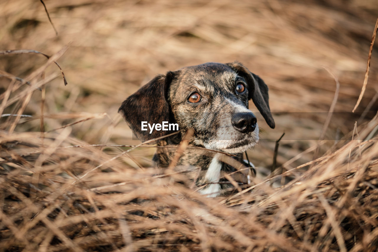 one animal, animal themes, animal, mammal, canine, dog, vertebrate, land, selective focus, pets, field, domestic, domestic animals, no people, grass, plant, nature, day, looking, animal body part, animal head