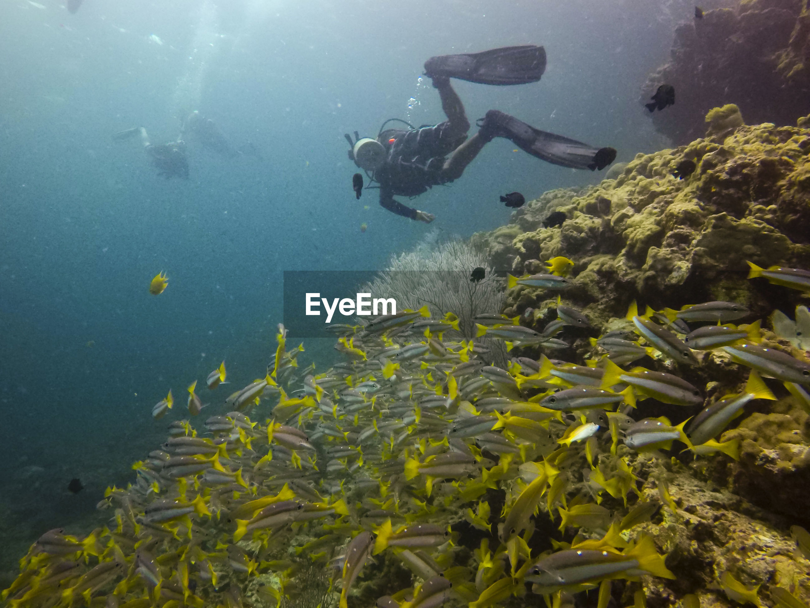 People swimming by school of fish in sea