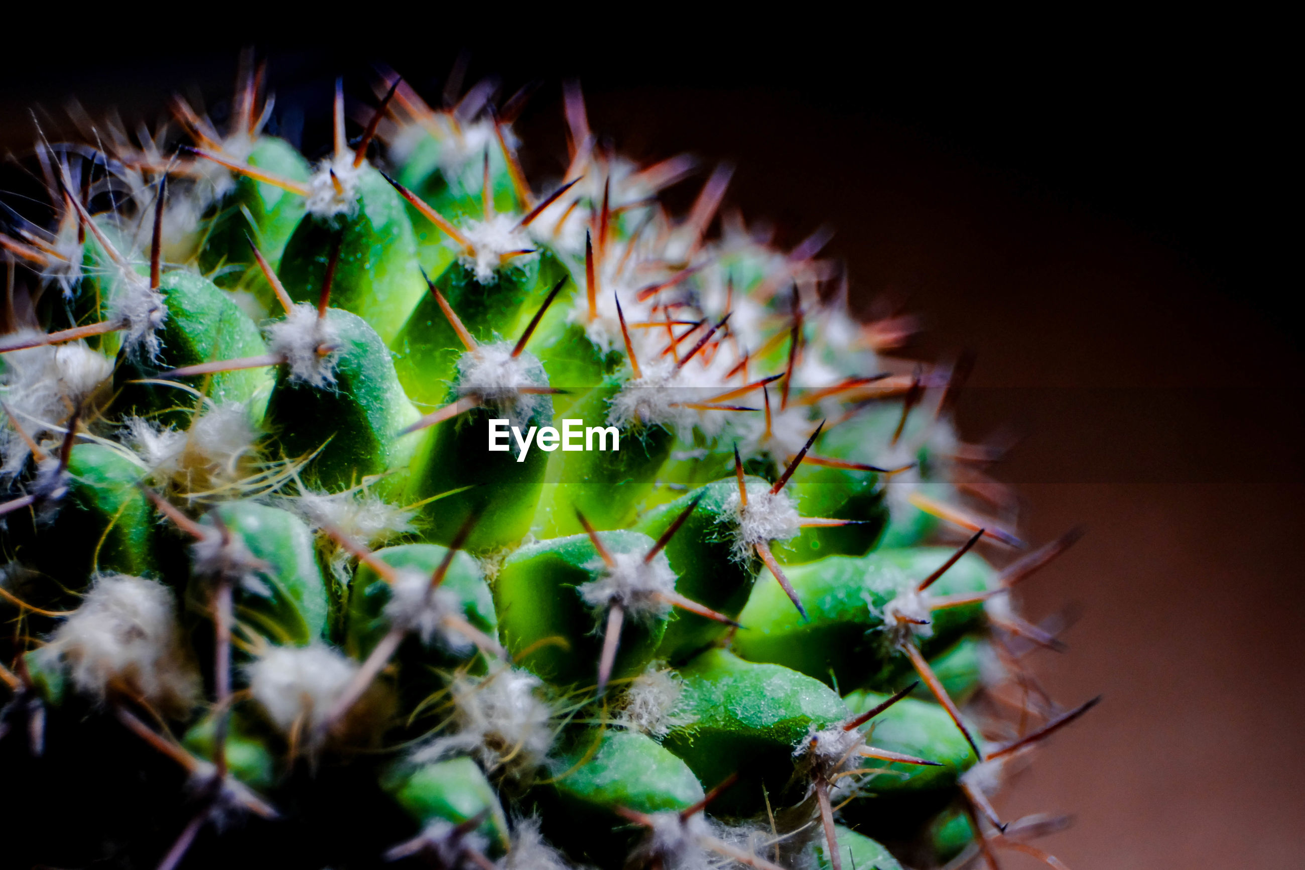 succulent plant, cactus, thorn, growth, close-up, plant, spiked, beauty in nature, selective focus, sharp, green color, nature, no people, potted plant, day, freshness, vulnerability, spiky, flower, outdoors