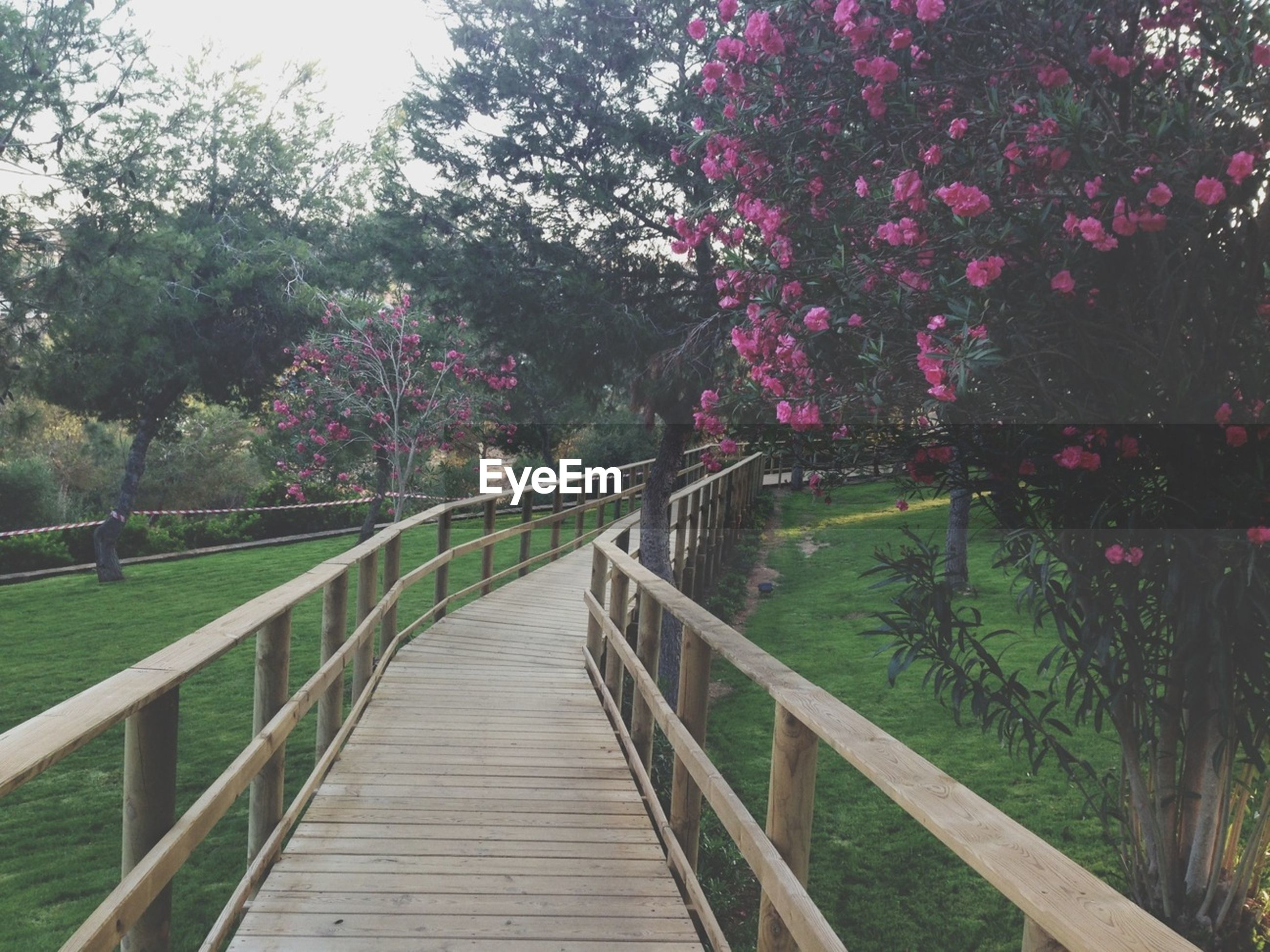 tree, railing, the way forward, growth, footbridge, flower, nature, beauty in nature, tranquility, wood - material, boardwalk, tranquil scene, park - man made space, branch, plant, walkway, day, scenics, outdoors, freshness