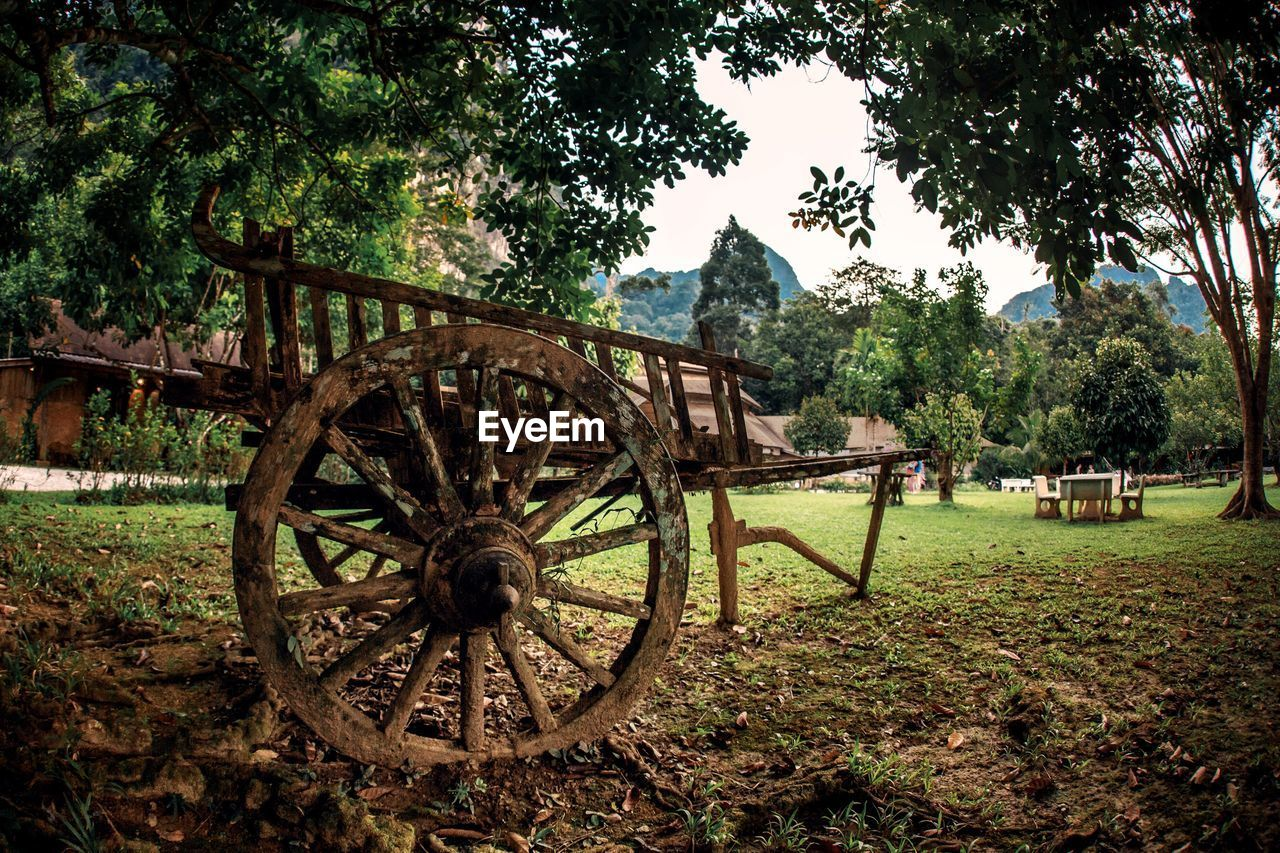 plant, tree, land, field, wheel, nature, grass, wagon wheel, growth, green color, transportation, day, no people, cart, abandoned, obsolete, outdoors, wood - material, landscape