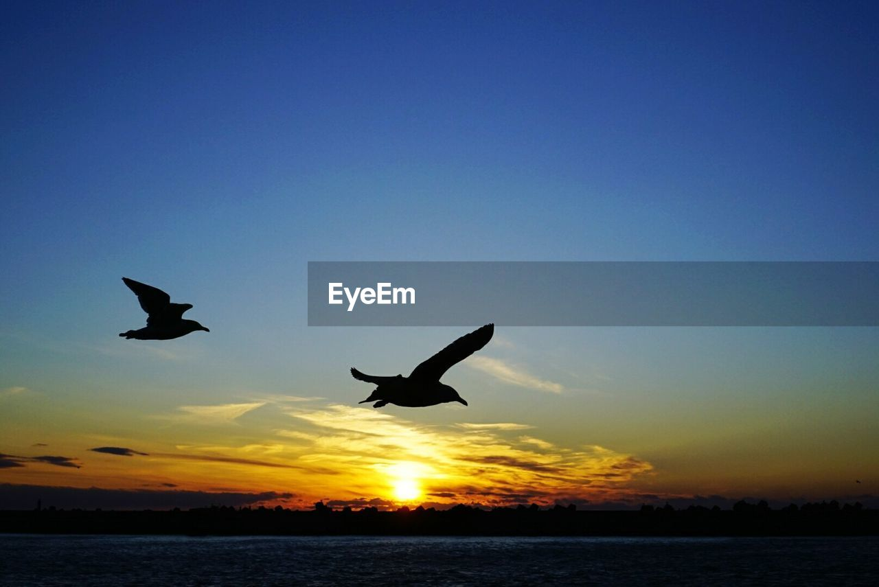 sunset, bird, flying, silhouette, animals in the wild, spread wings, nature, animal themes, water, mid-air, sea, animal wildlife, beauty in nature, one animal, tranquil scene, seagull, sky, outdoors, no people, tranquility, low angle view, scenics, clear sky, day