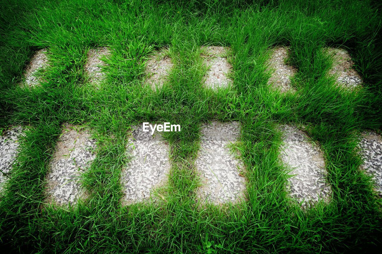 grass, field, green color, high angle view, growth, no people, outdoors, nature, day, plant