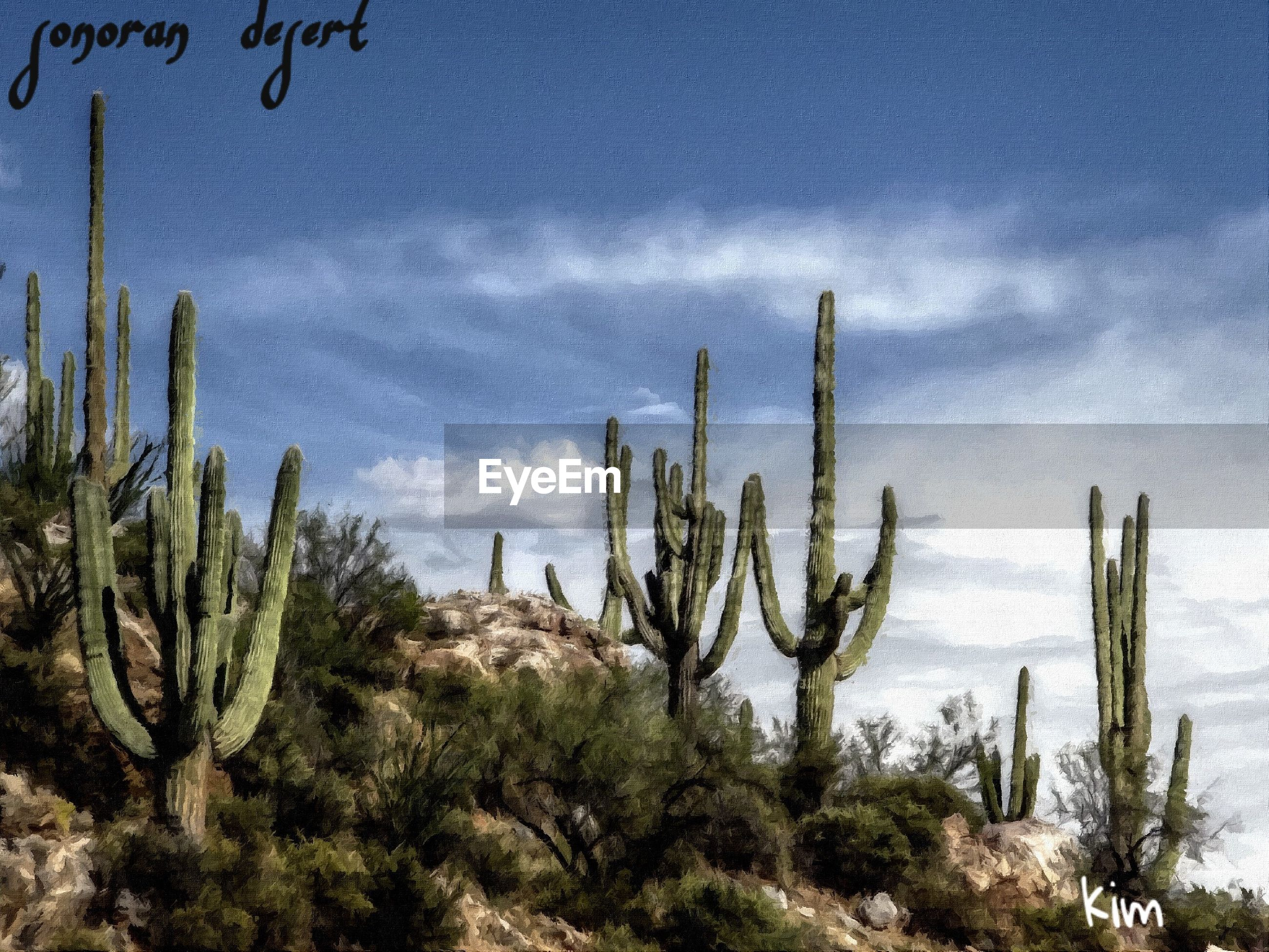 growth, plant, cactus, sky, nature, tranquility, scenics, tranquil scene, blue, branch, beauty in nature, day, non-urban scene, saguaro cactus, cloud - sky, outdoors, arid climate, green color, green, remote, no people, tourism