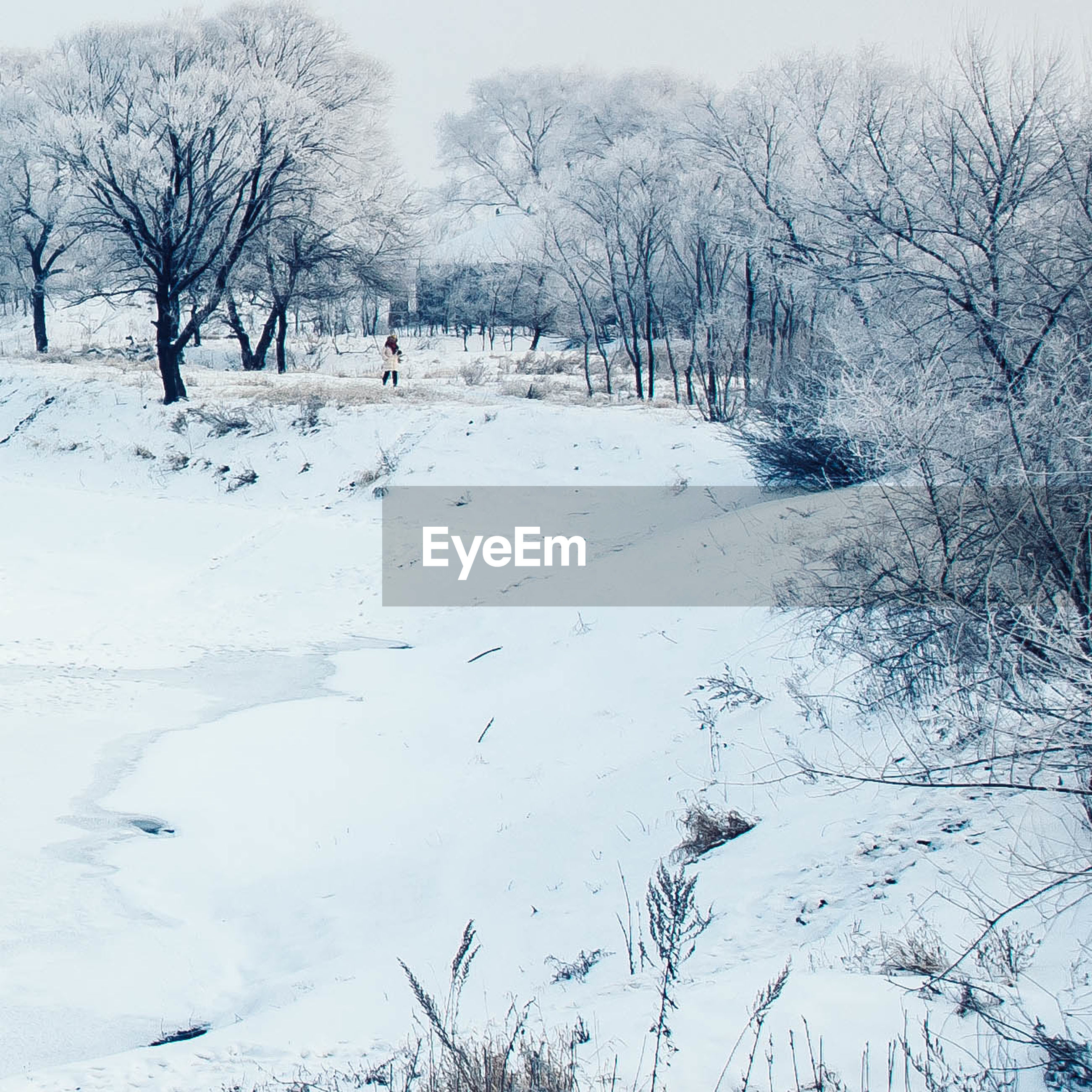 snow, winter, cold temperature, season, tree, weather, bare tree, covering, tranquility, tranquil scene, nature, landscape, white color, field, beauty in nature, frozen, branch, scenics, covered, day