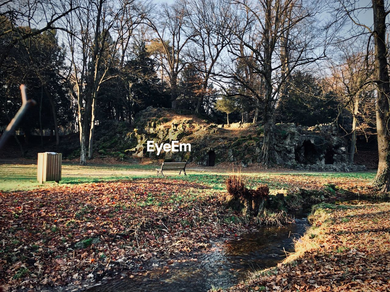 tree, plant, autumn, nature, bare tree, plant part, leaf, day, change, park, outdoors, architecture, no people, land, branch, park - man made space, tree trunk, leaves, field, trunk, fall