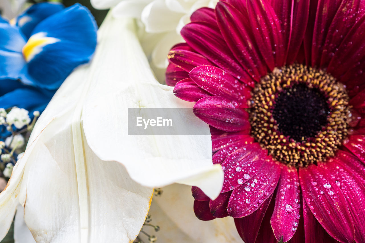 flower, petal, flower head, close-up, beauty in nature, nature, fragility, no people, freshness, growth, day, outdoors