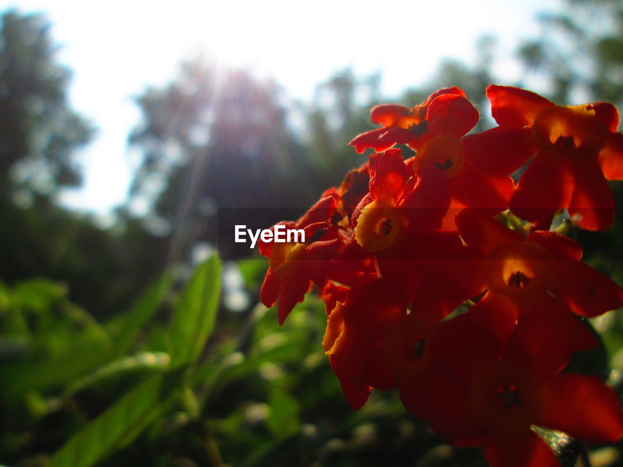 flower, growth, nature, petal, beauty in nature, fragility, red, plant, freshness, outdoors, flower head, close-up, no people, focus on foreground, blooming, day, springtime, sky