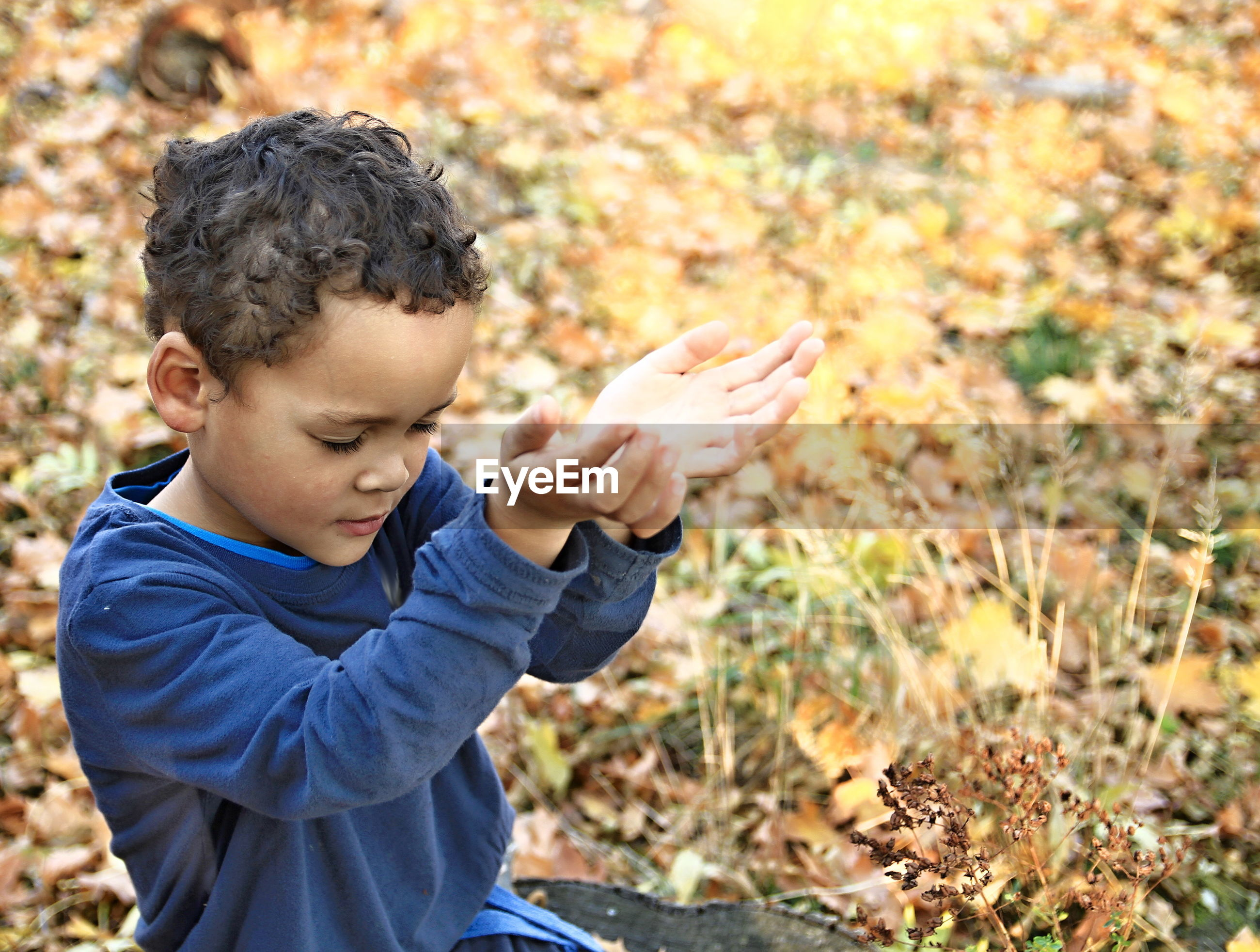 Close-up of boy praying in park during autumn