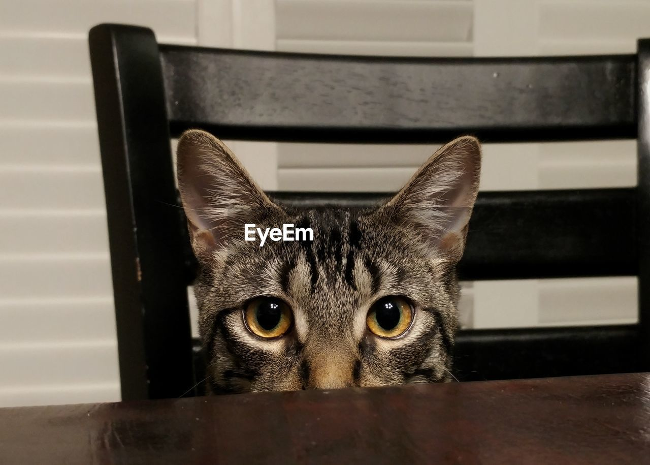 Close-up portrait of cat sitting on chair at table